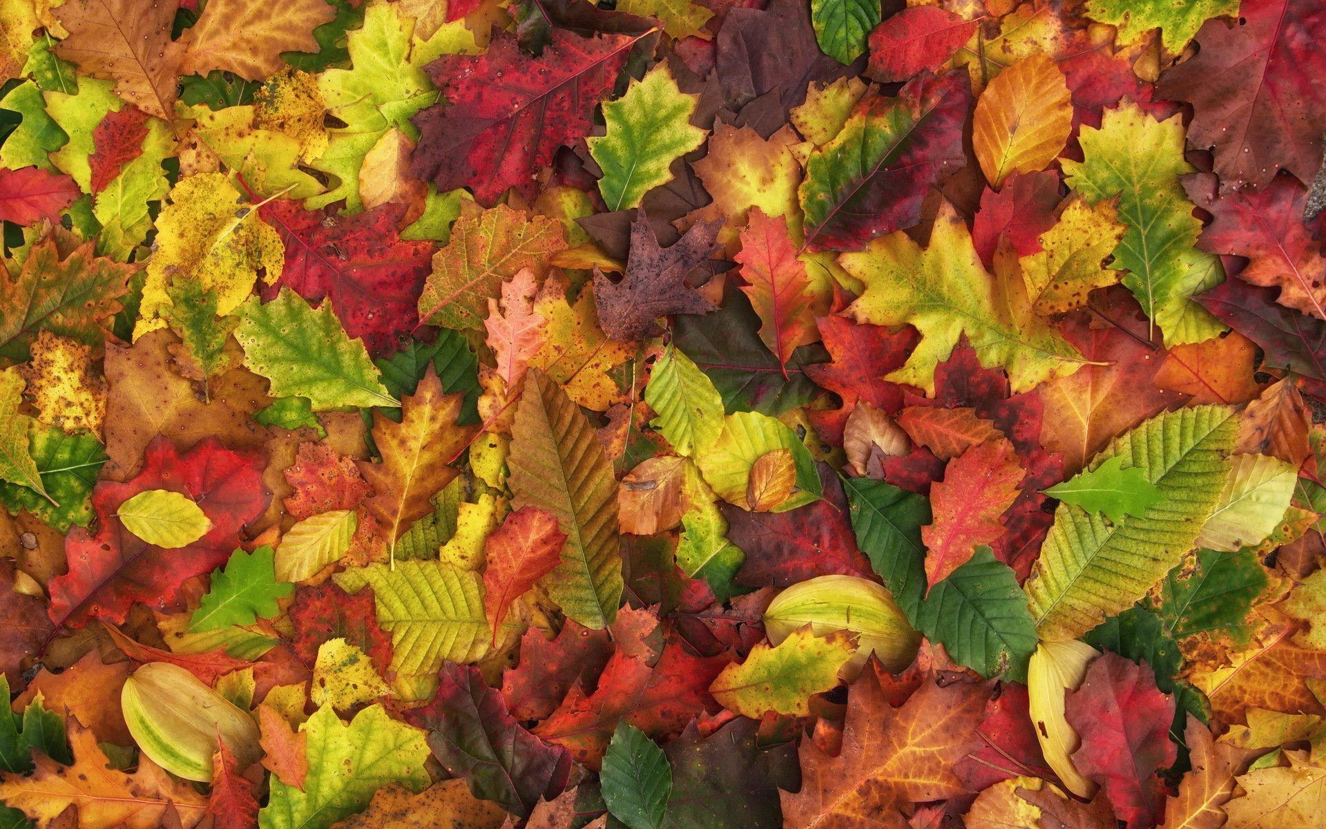 картинки земля покрытая осенними листьями список посвящён