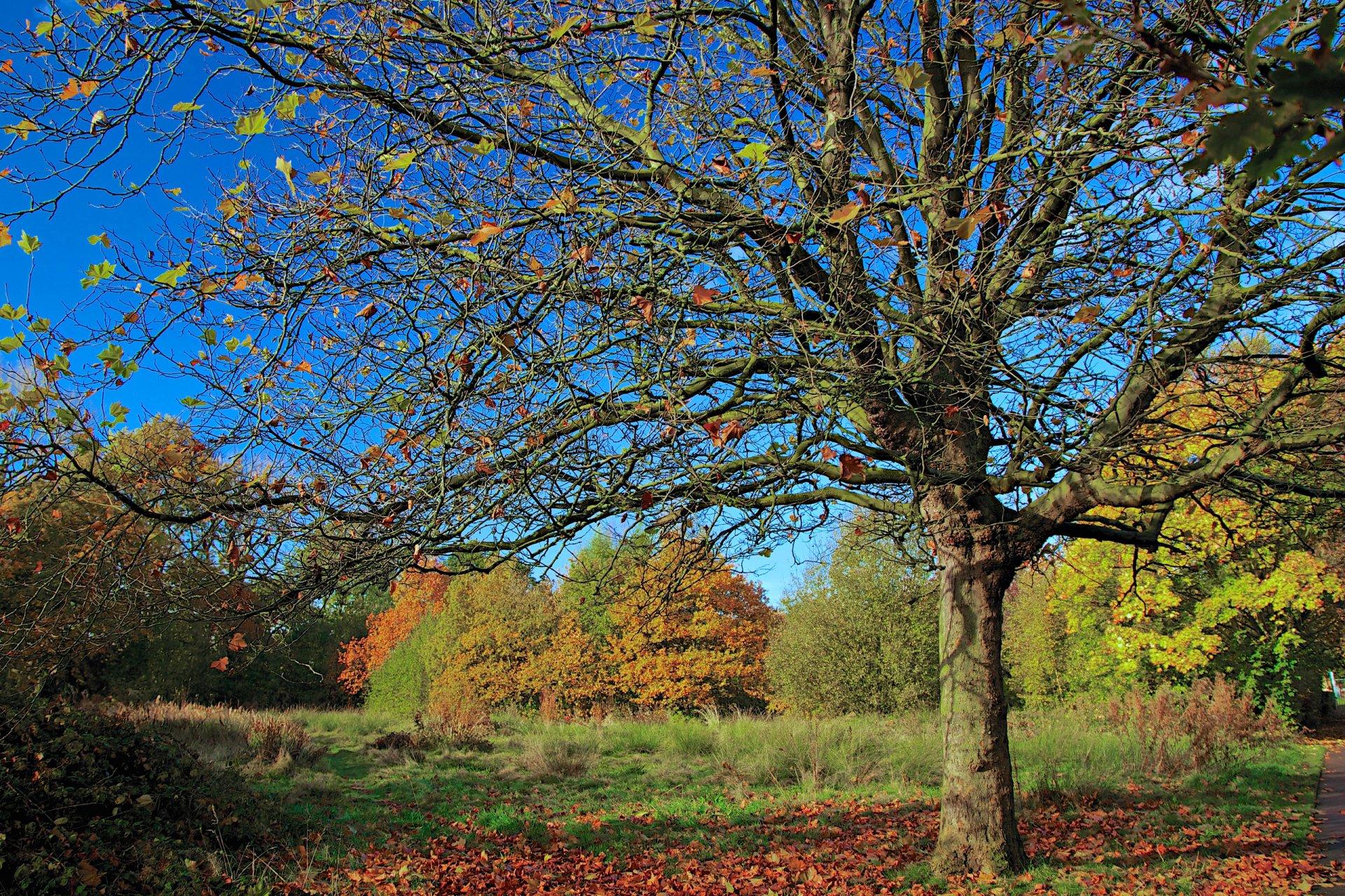 любимых деревья с опавшей листвой картинки поздравительных плакатов день
