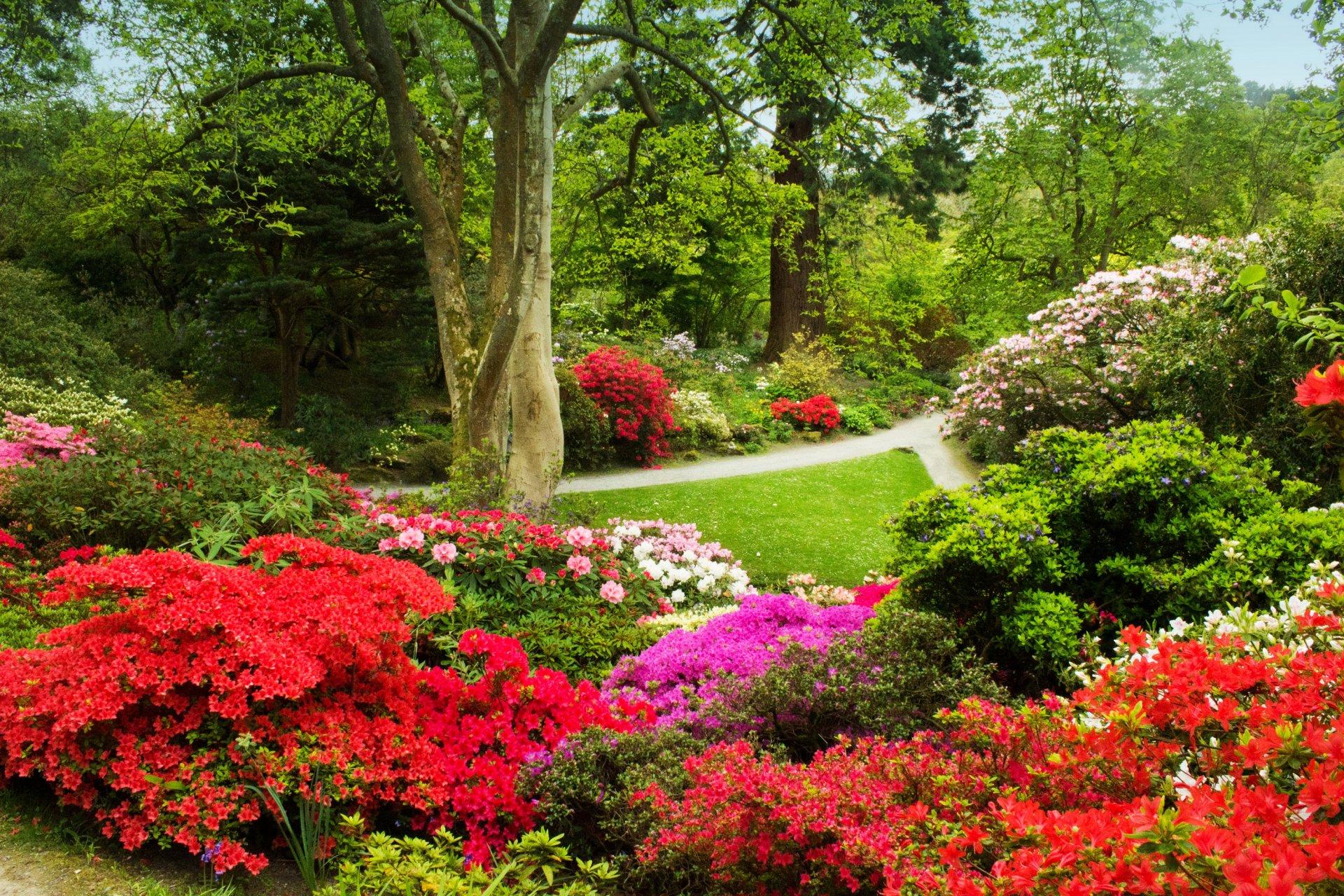 Красивый парк с цветами