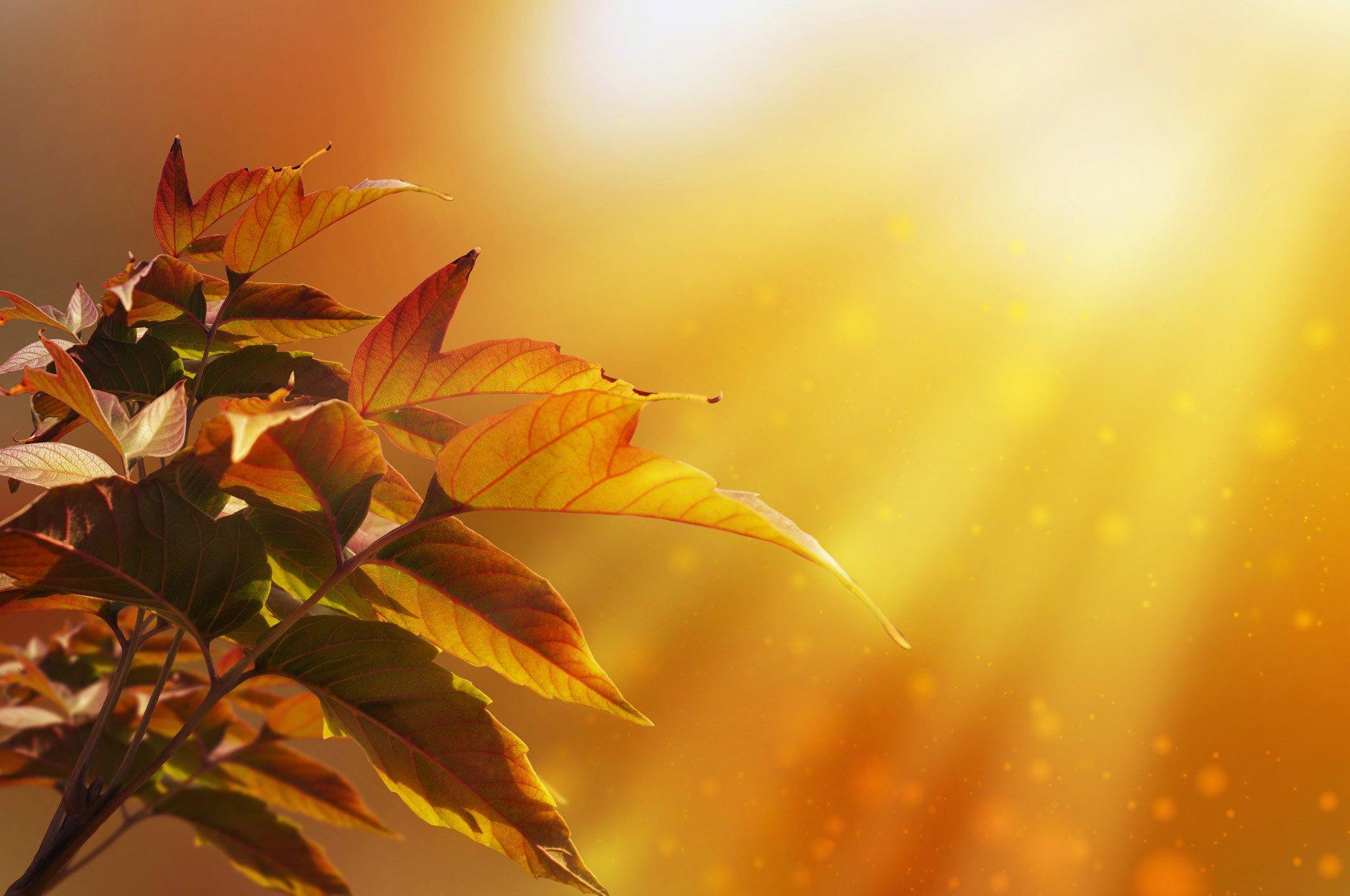 Открытка с желтыми листьями