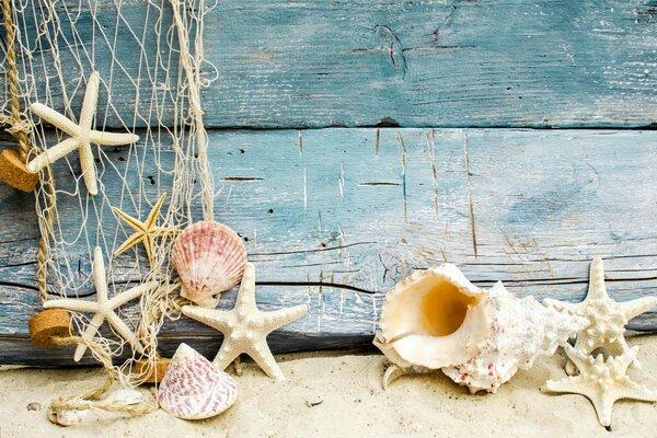 Звезды пляж топлесс 42