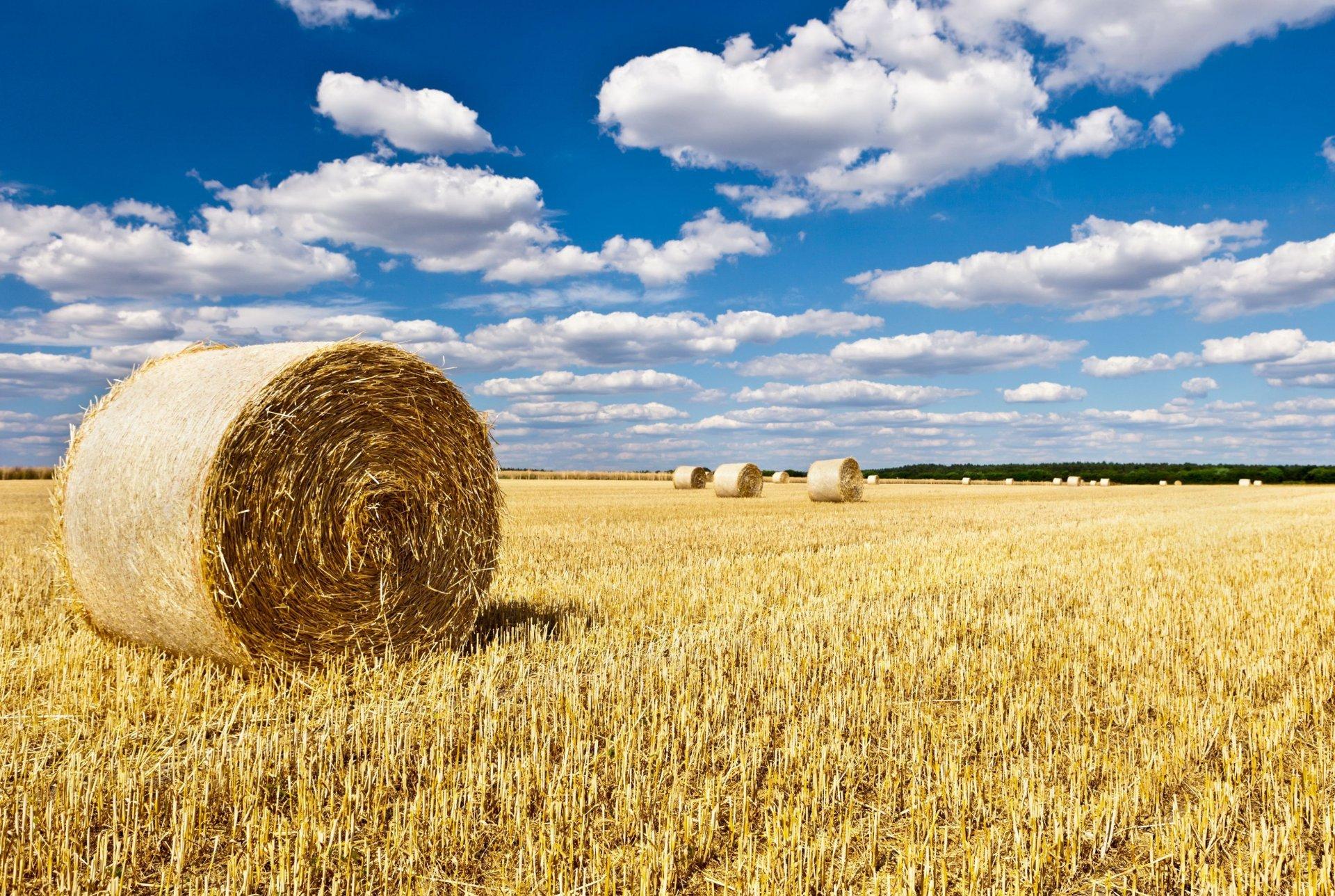 солома поле небо облака straw field the sky clouds  № 1783626 без смс