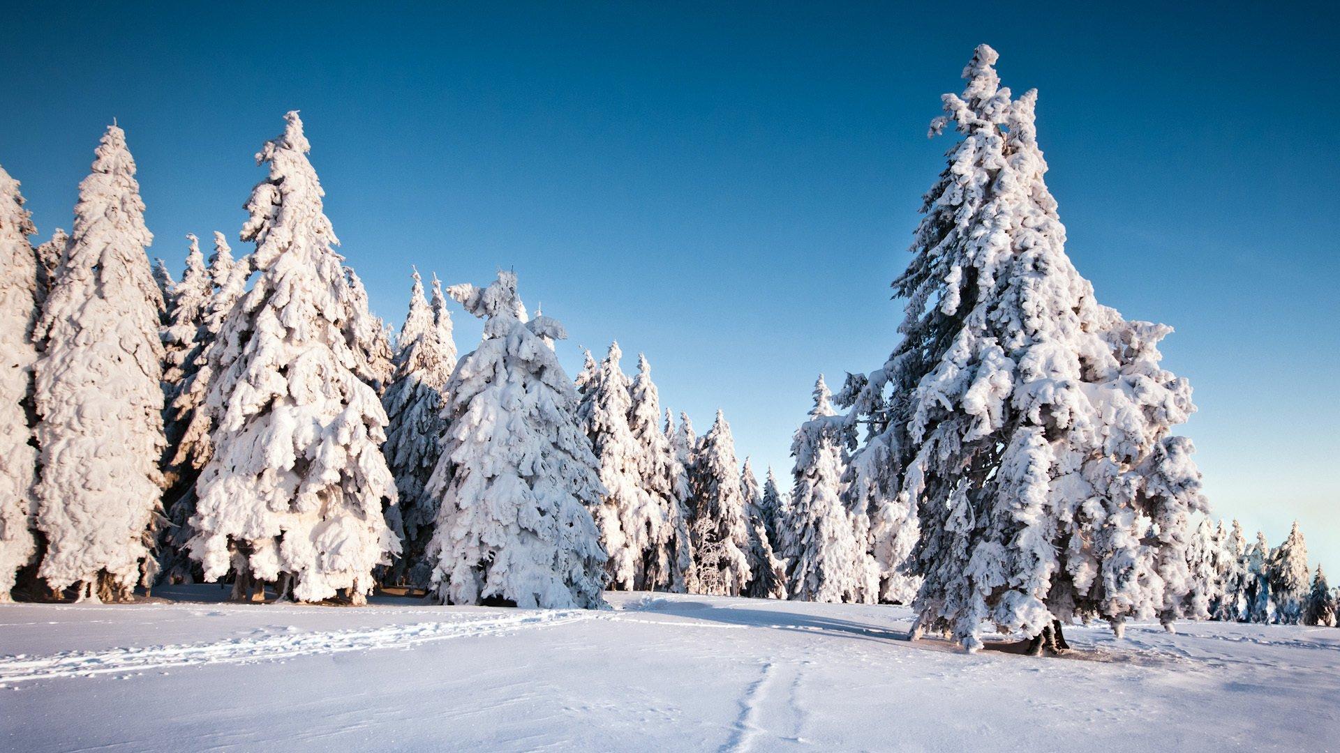 Картинки на рабочий стол зима ель