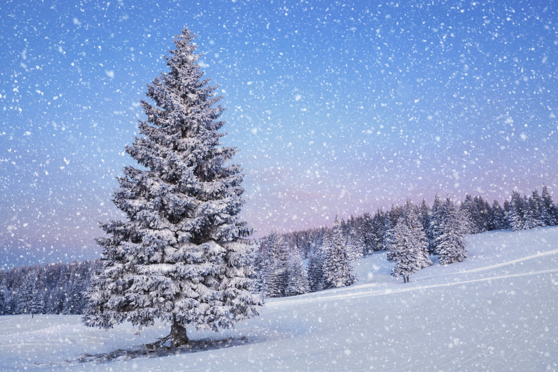 Зимние елочки картинка
