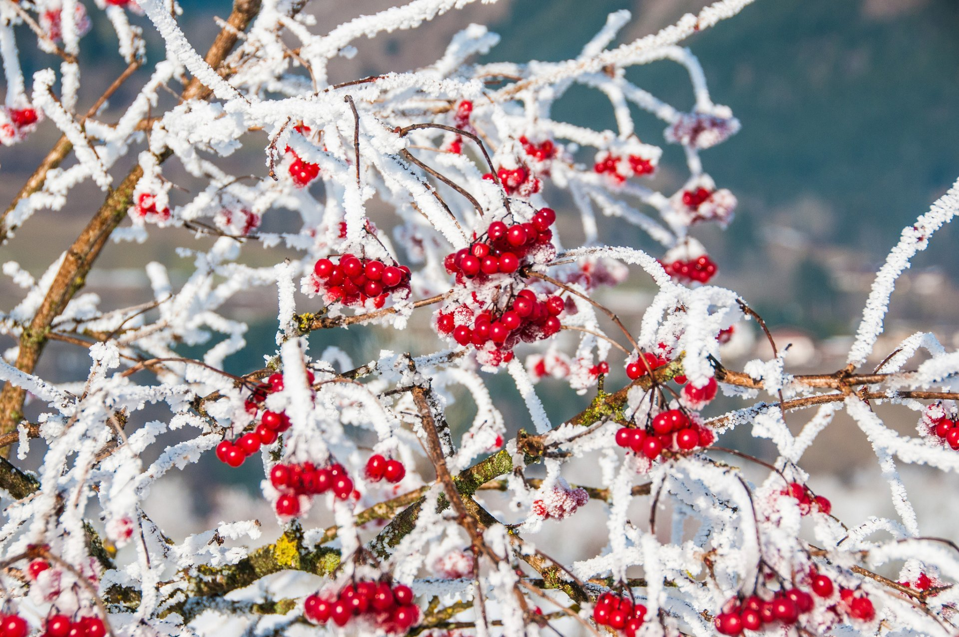 природа ветка снег  № 3089927 бесплатно