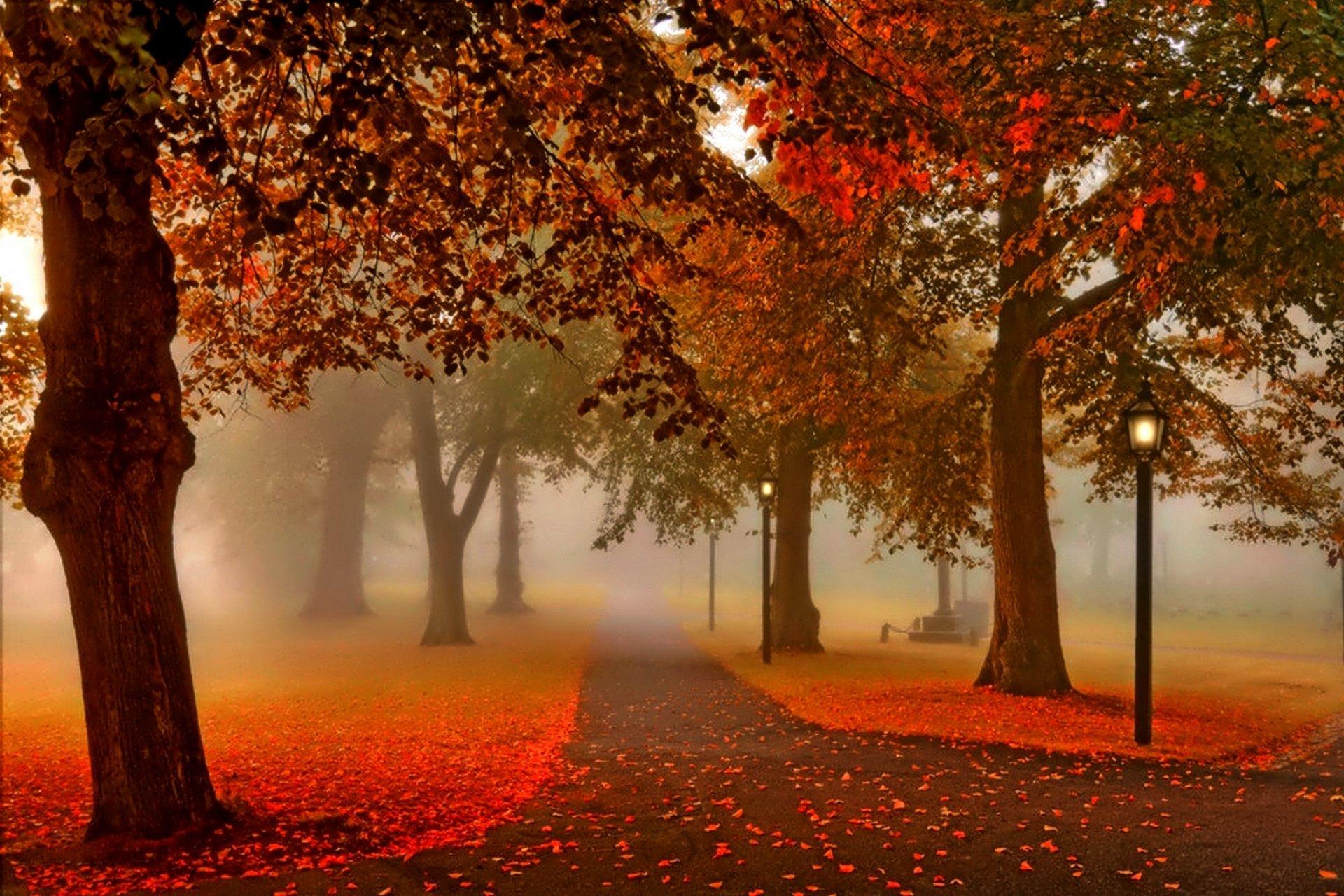 пара закат парк осень скачать