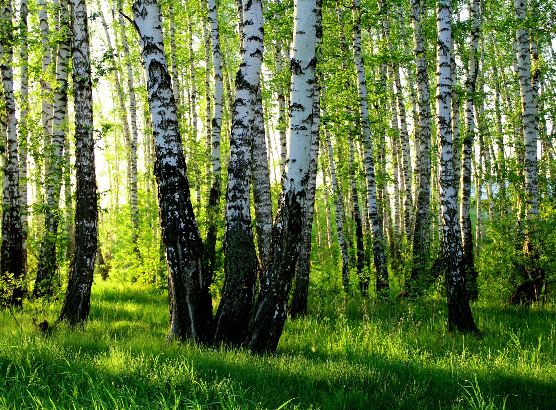 обои для рабочего стола лето природа россии бесплатно скачать № 183408 без смс