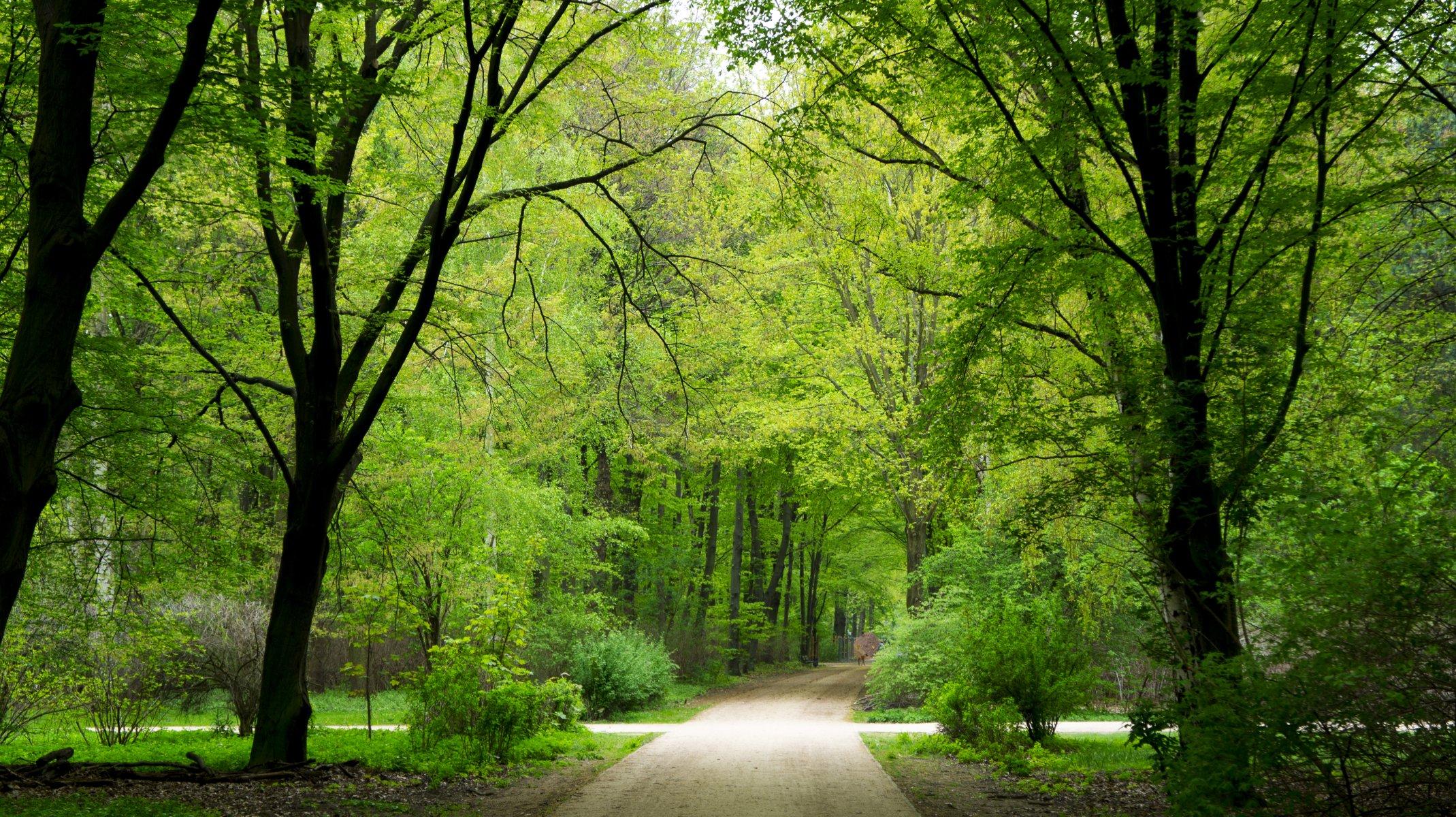 зелень лес деревья  № 1078664 загрузить