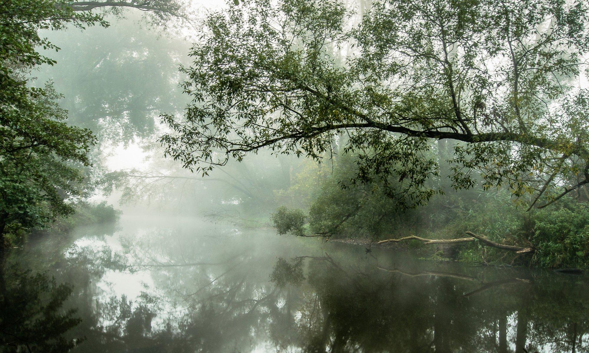 Туман вдоль реки  № 1281339 без смс