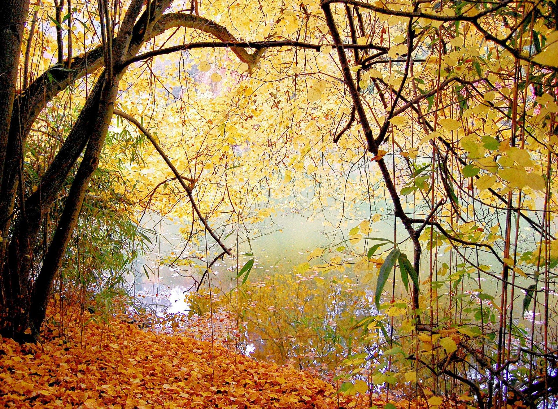 осень озеро деревья листья бесплатно