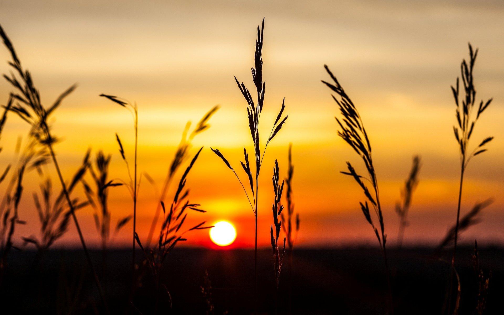 природа колосья рассвет небо бесплатно