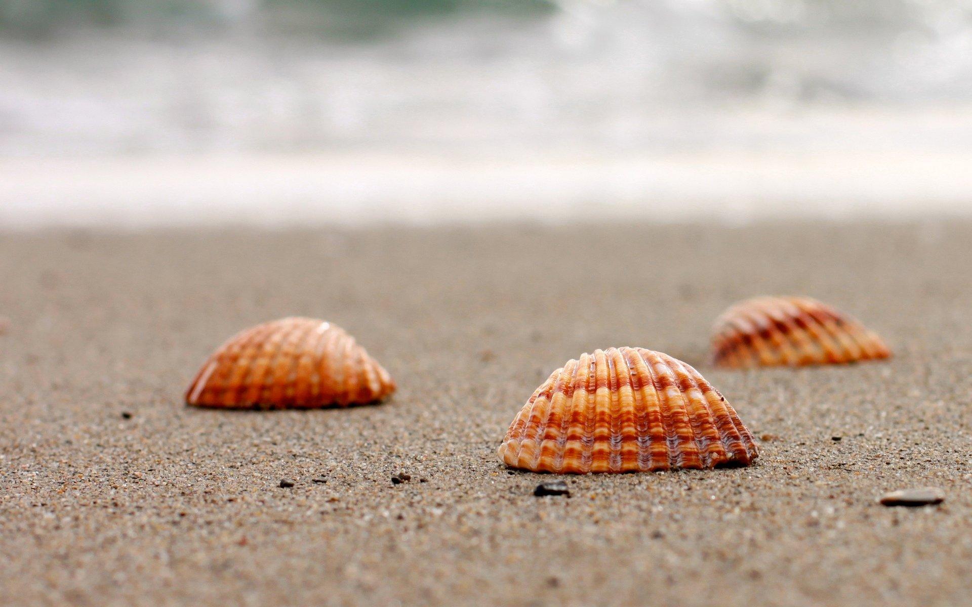 природа ракушка песок nature shell sand  № 1246783  скачать