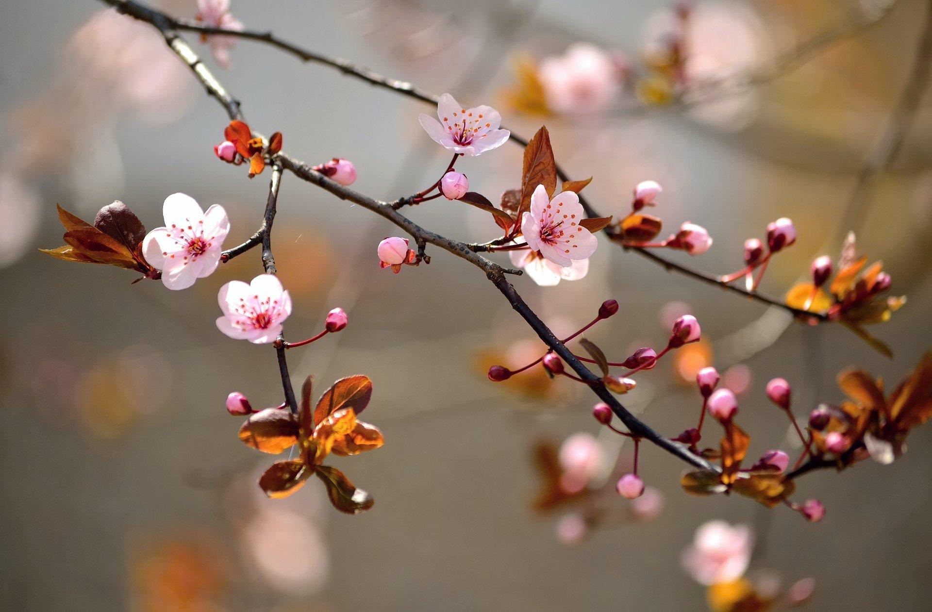 весна фото обои для мобильника последнее время