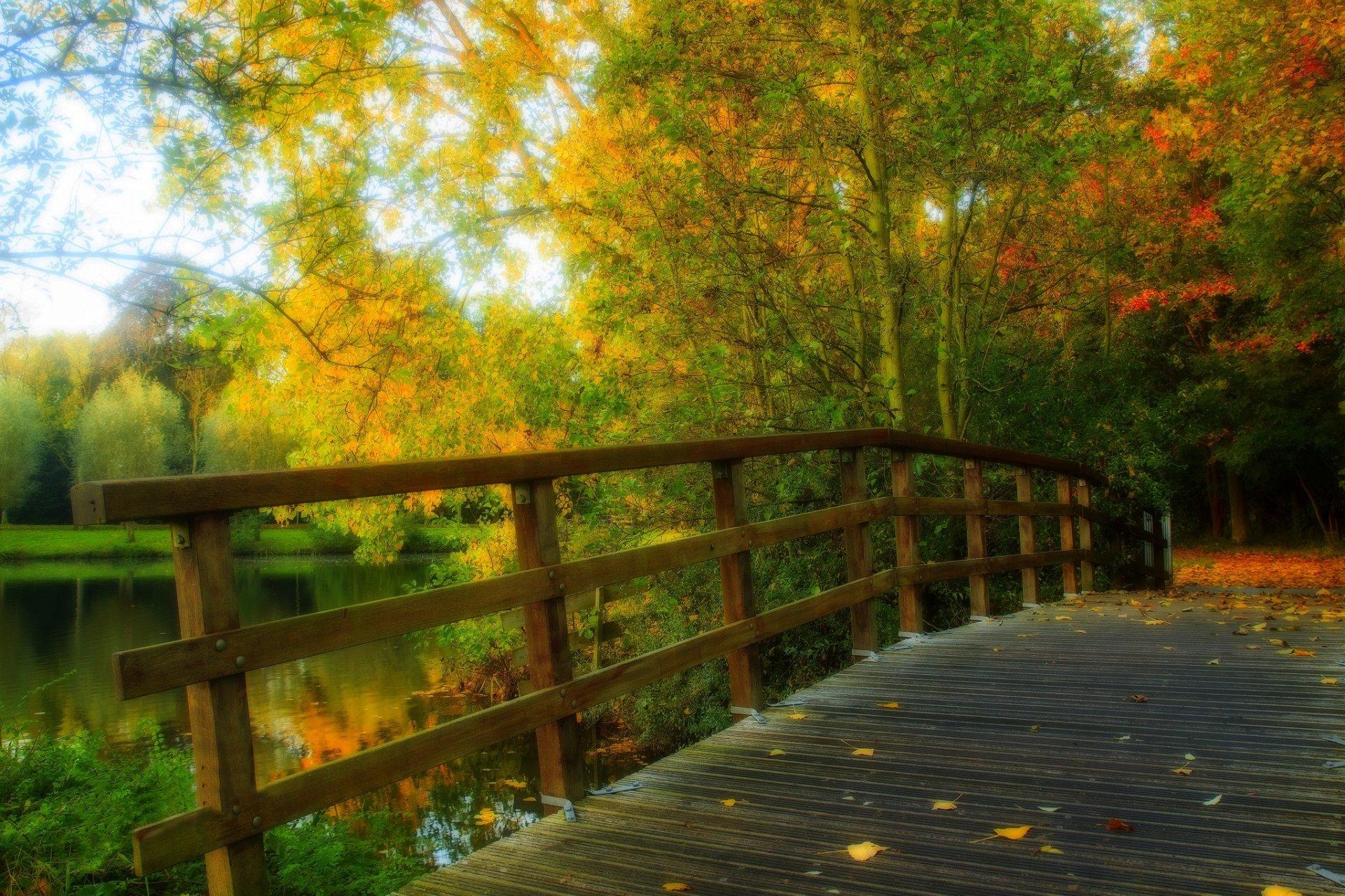 природа мост деревья лес река загрузить