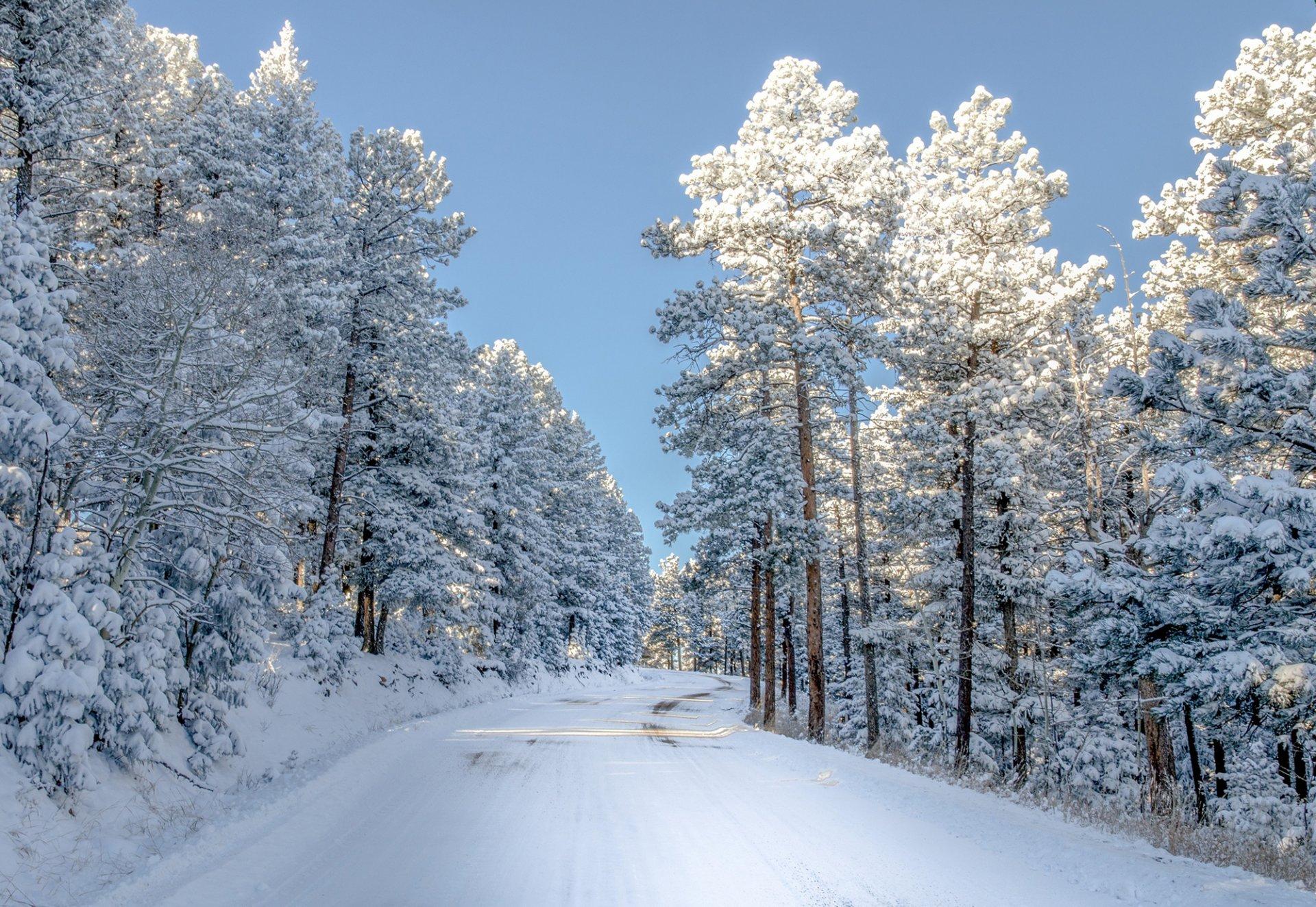 Фото природы лес зимой