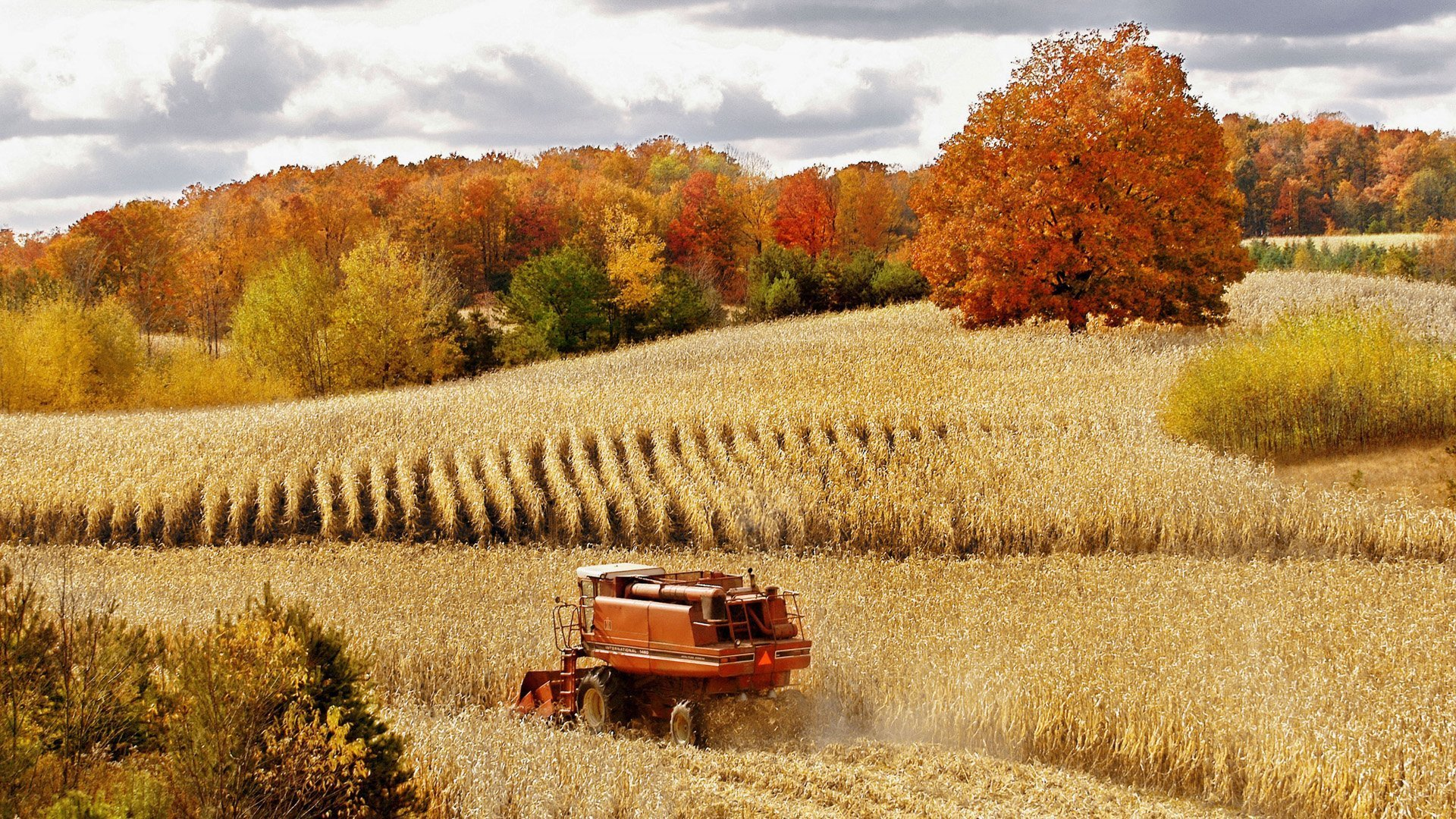 Картинки осень поле