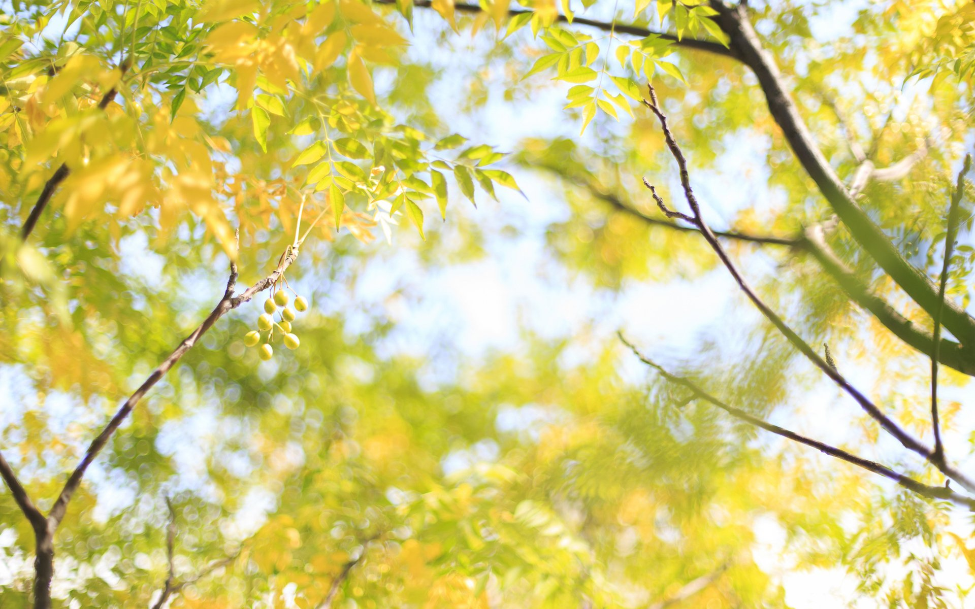 разное природа лампа цветы желтые осень  № 2634628 загрузить