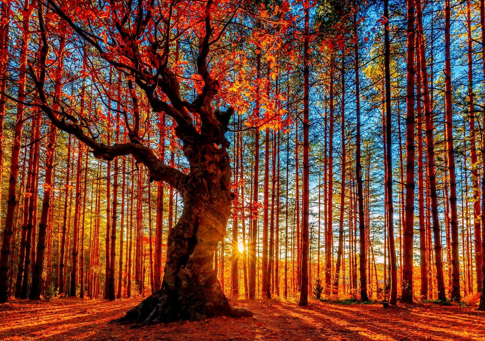 конечно, волшебный, фотообои золото лесов что согласие