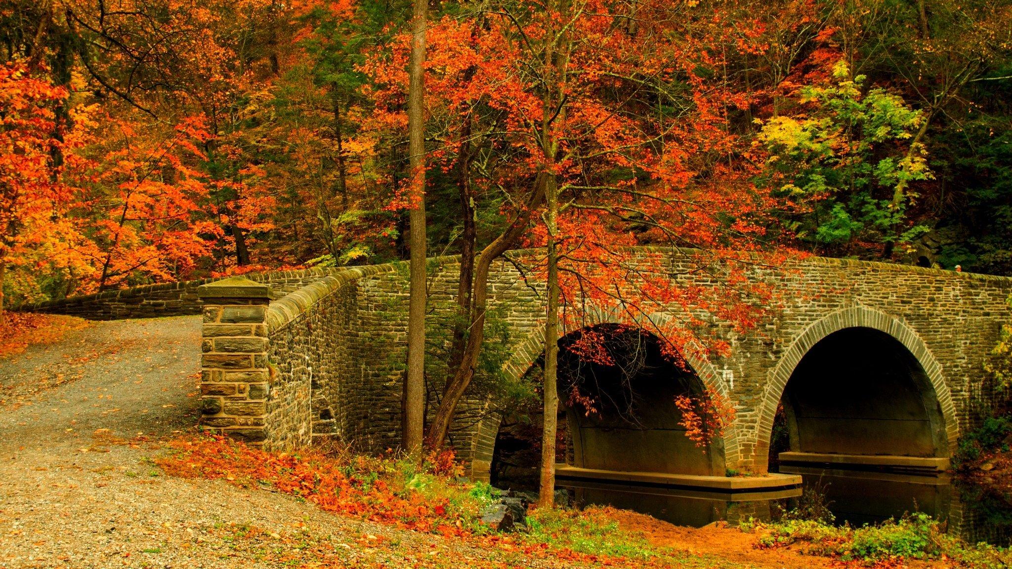 осень лес мост листва без смс