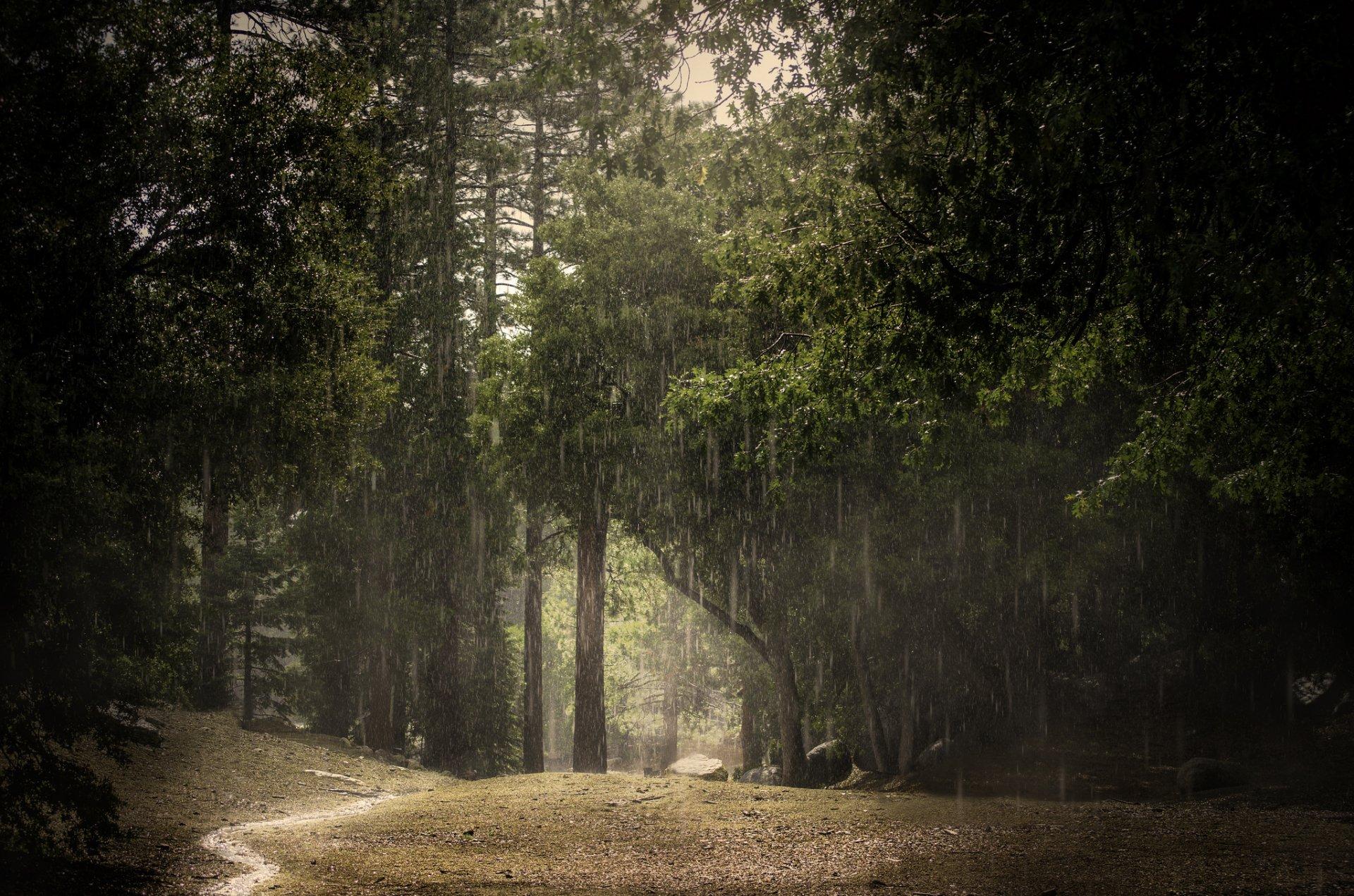 фото дождливого леса личные сообщения группы
