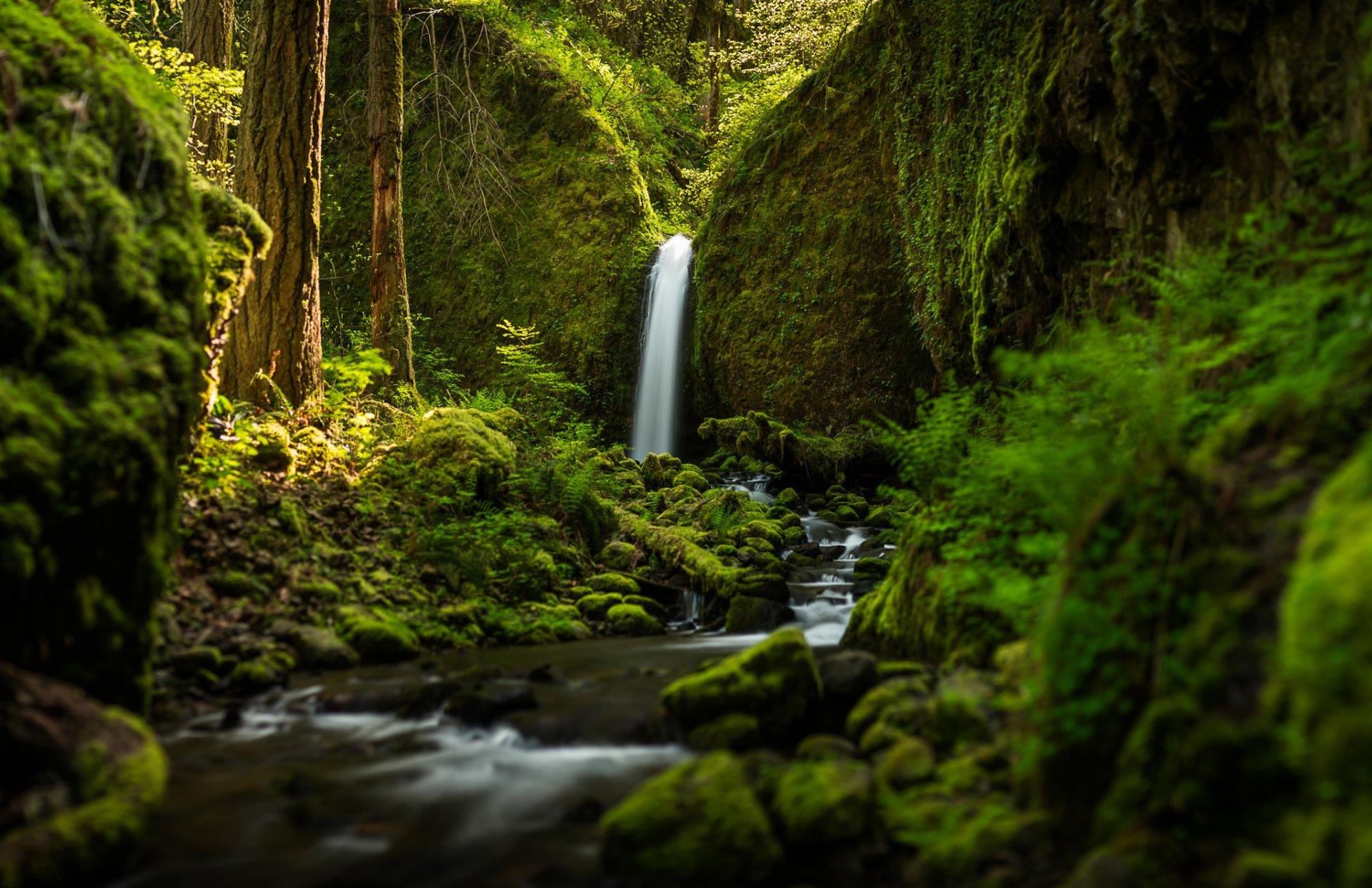 природа река водопад лес деревья nature river waterfall forest trees  № 484134 без смс
