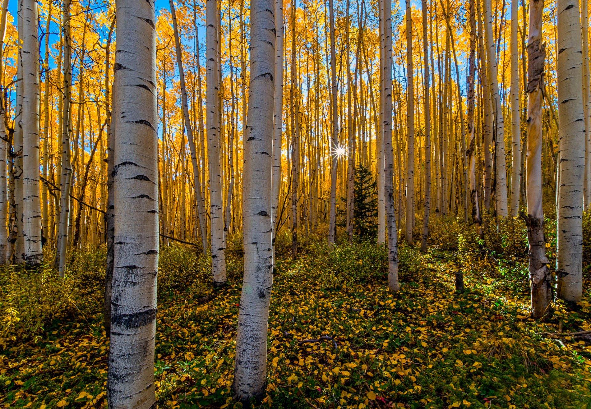 фотообои золото лесов начала