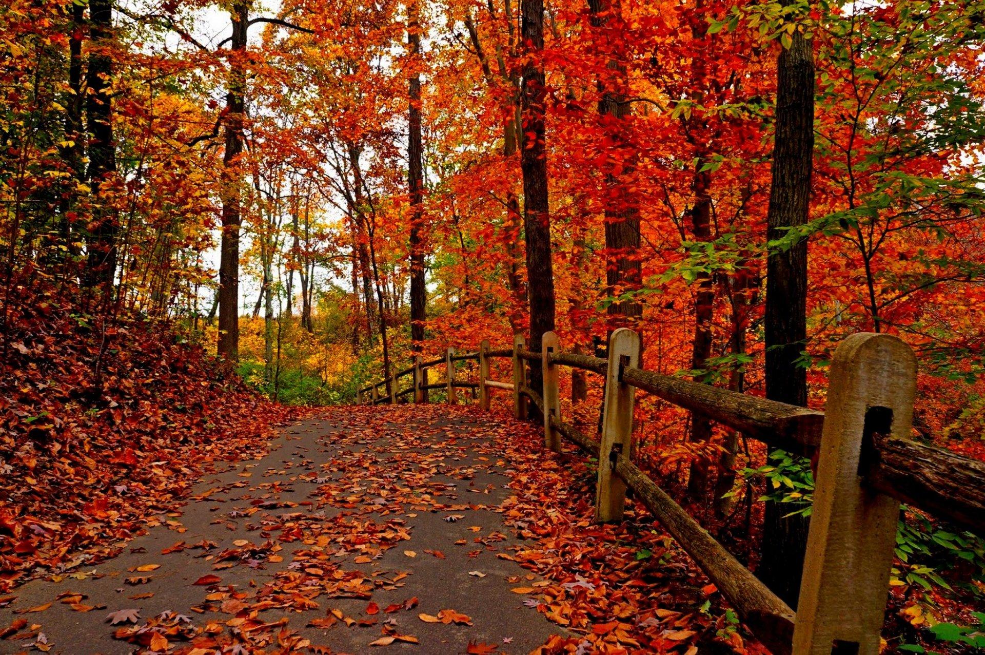 Осень лес парк фонарь листья скачать