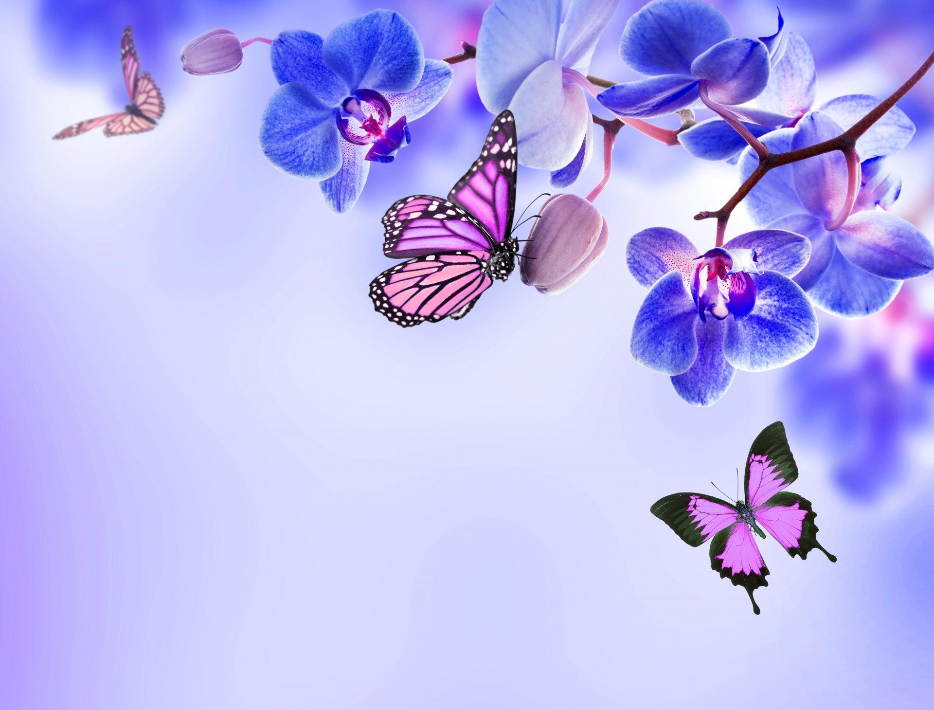 Открытка бабочка на орхидеей