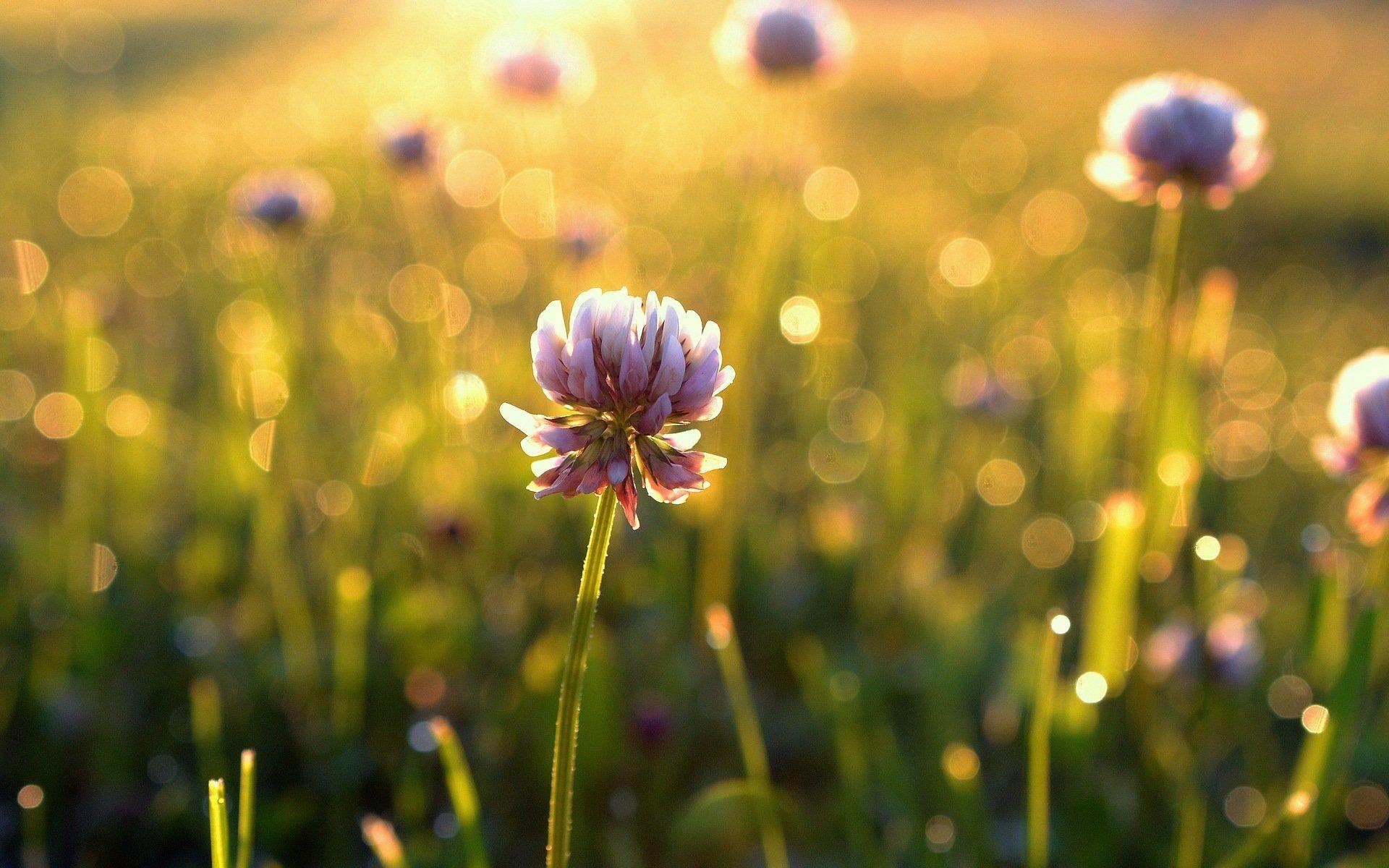 Обои тюльпан, цветы, луг. Абстракции foto 15