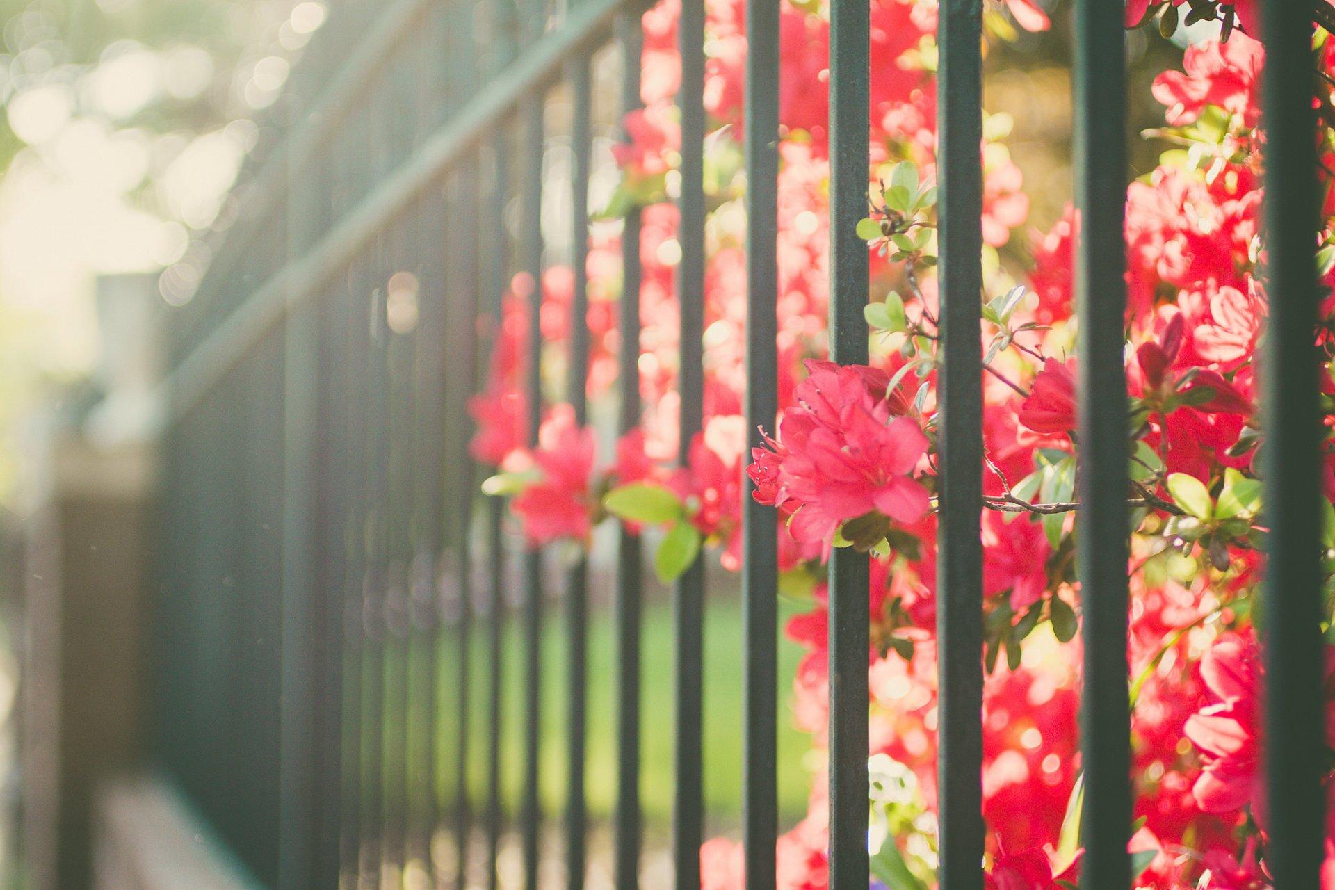 толстого картинки на рабочий стол забор в цветах следовать