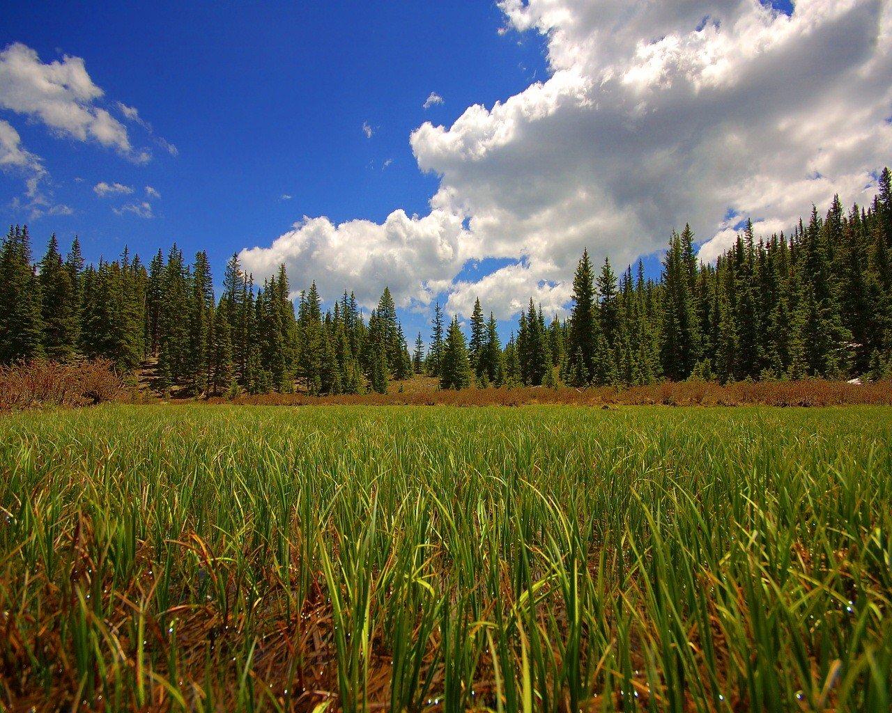 Открытки с полем и лесом