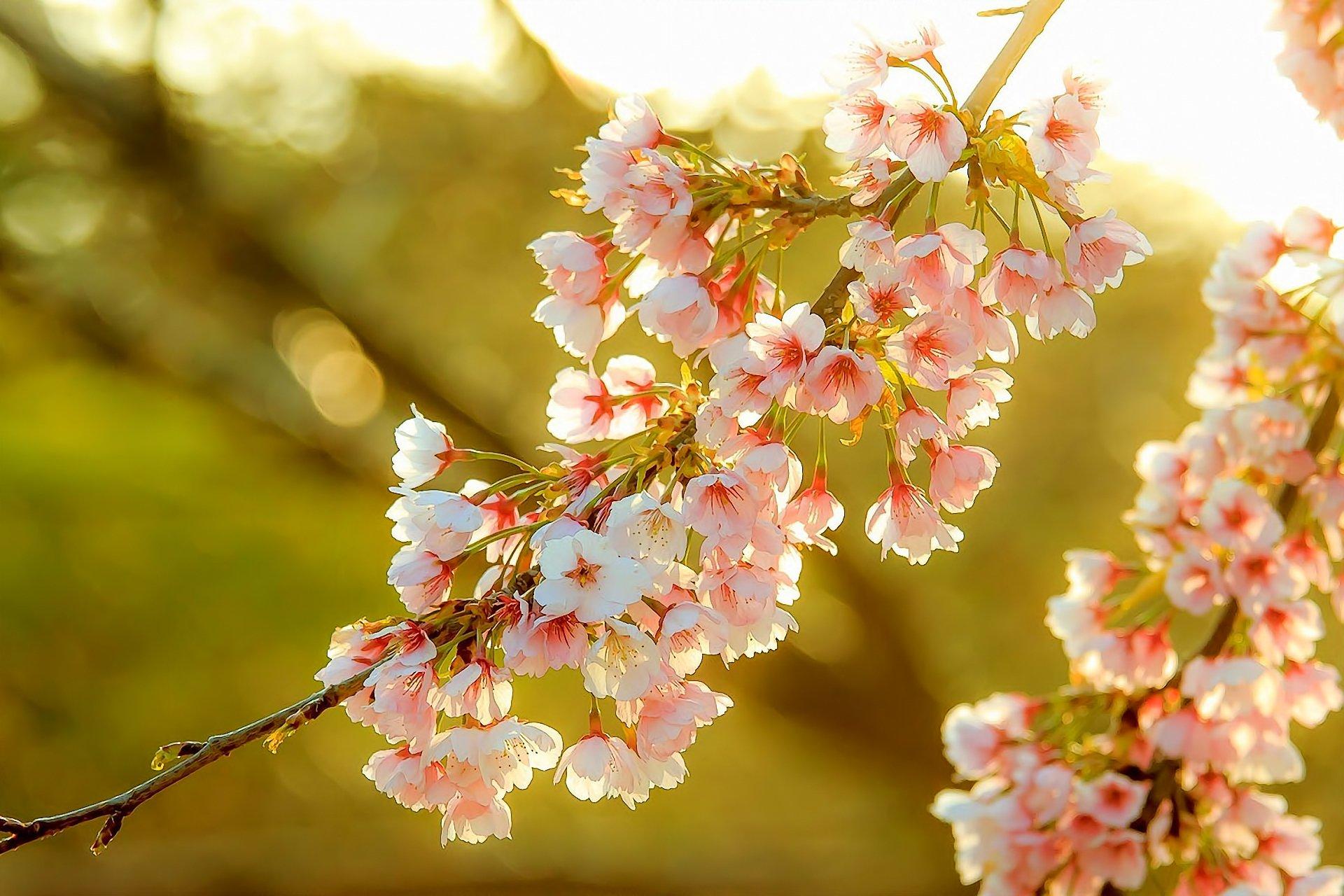 Весна солнце цветы картинки