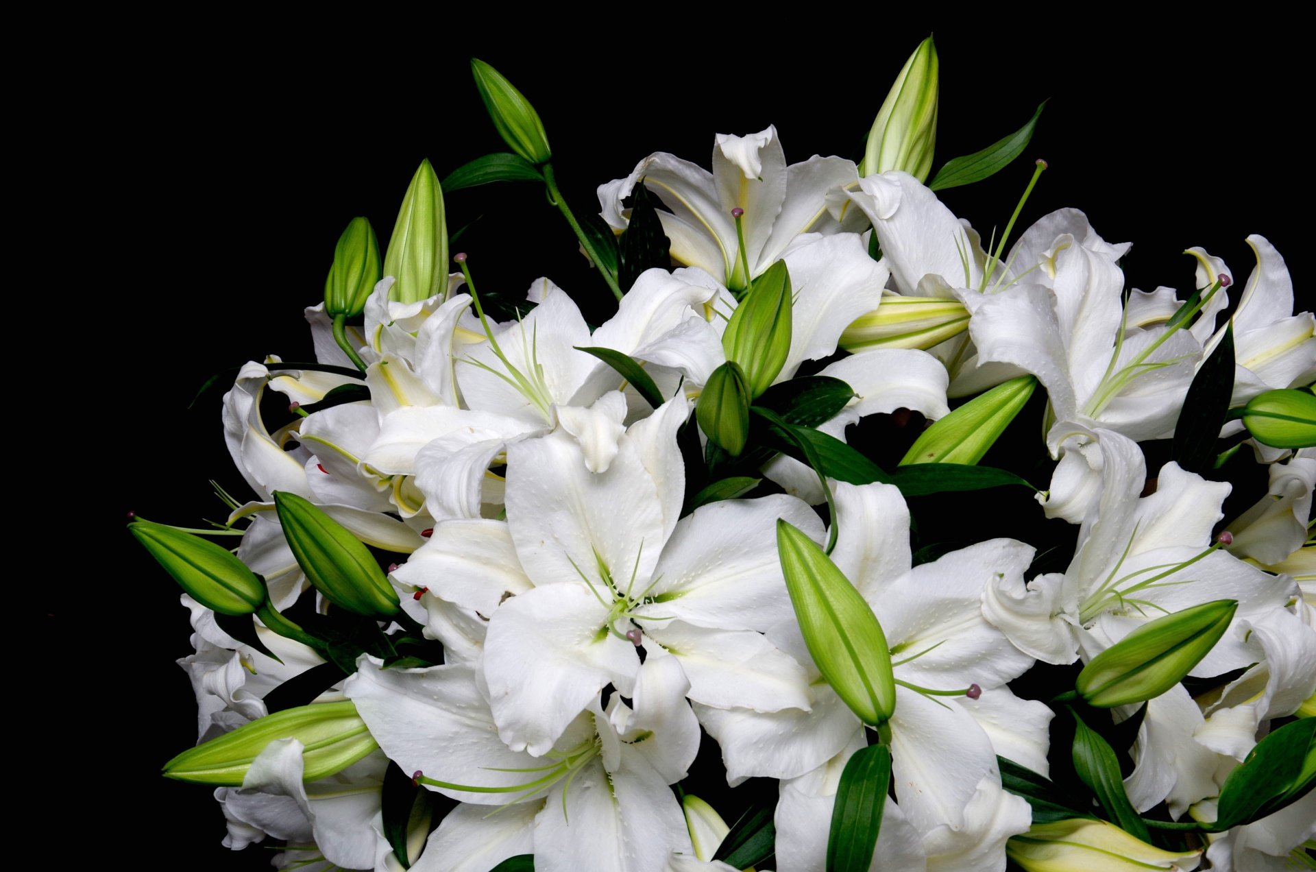 Как и когда цветет актинидия фото версии