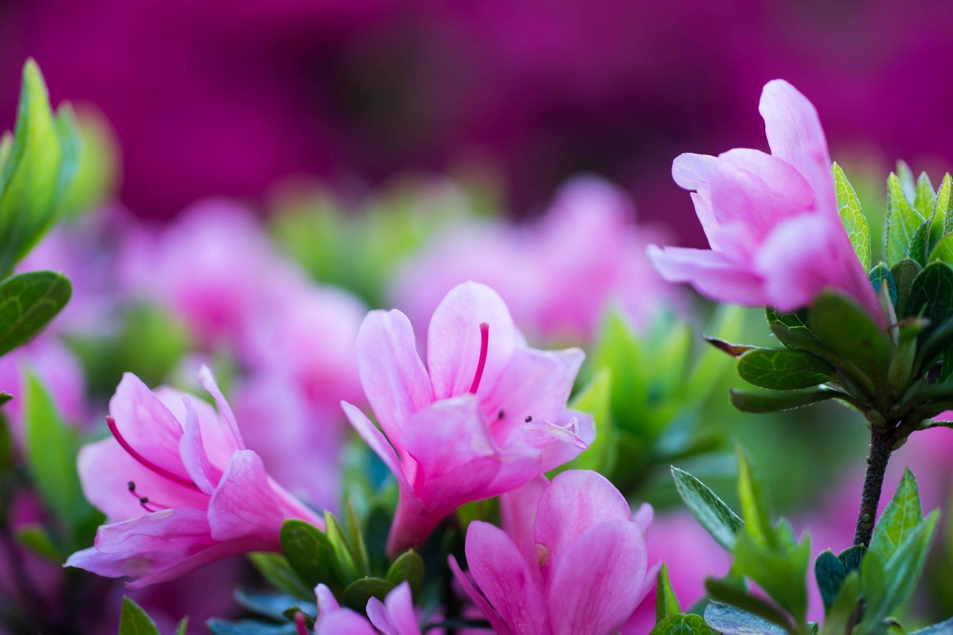 Фотообои на стол цветы фото высокого разрешения