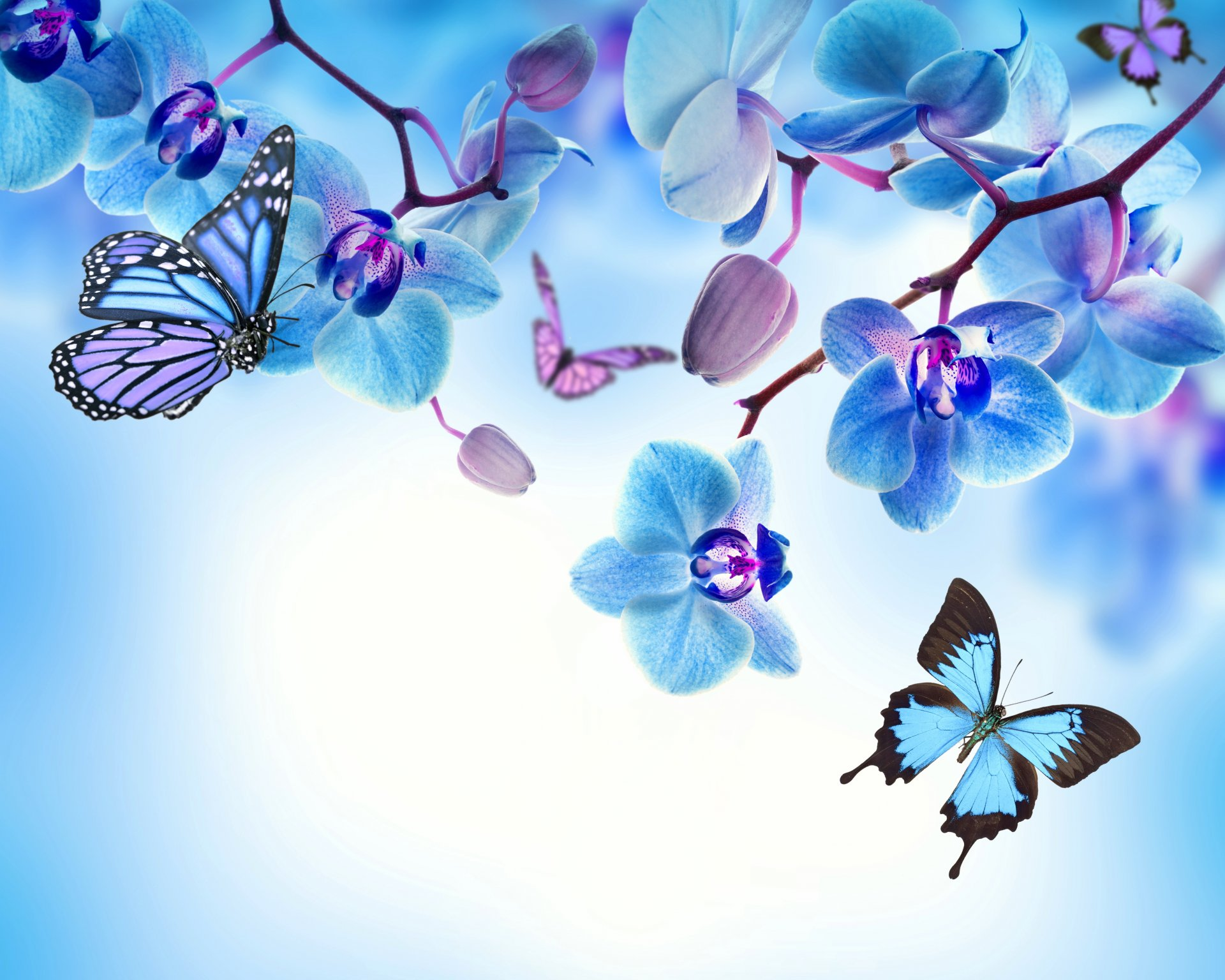 orchid blue flowers beautiful butterflies орхидея цветы ... Light Blue Flower Wallpaper