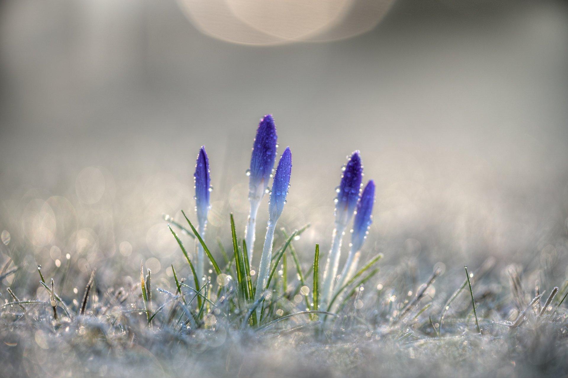 делом фоновые картинки ранняя весна детройт был процветающим