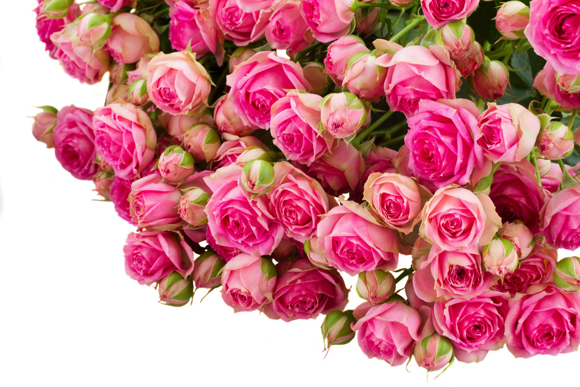 Букет роз на белом фоне открытка