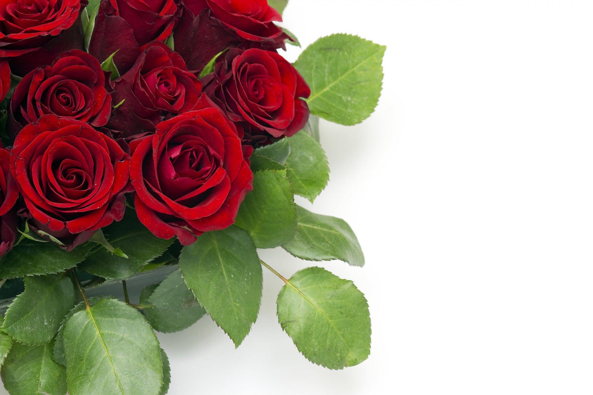 Картинки красивые розы с надписями (35 фото) Прикольные картинки и юмор 55