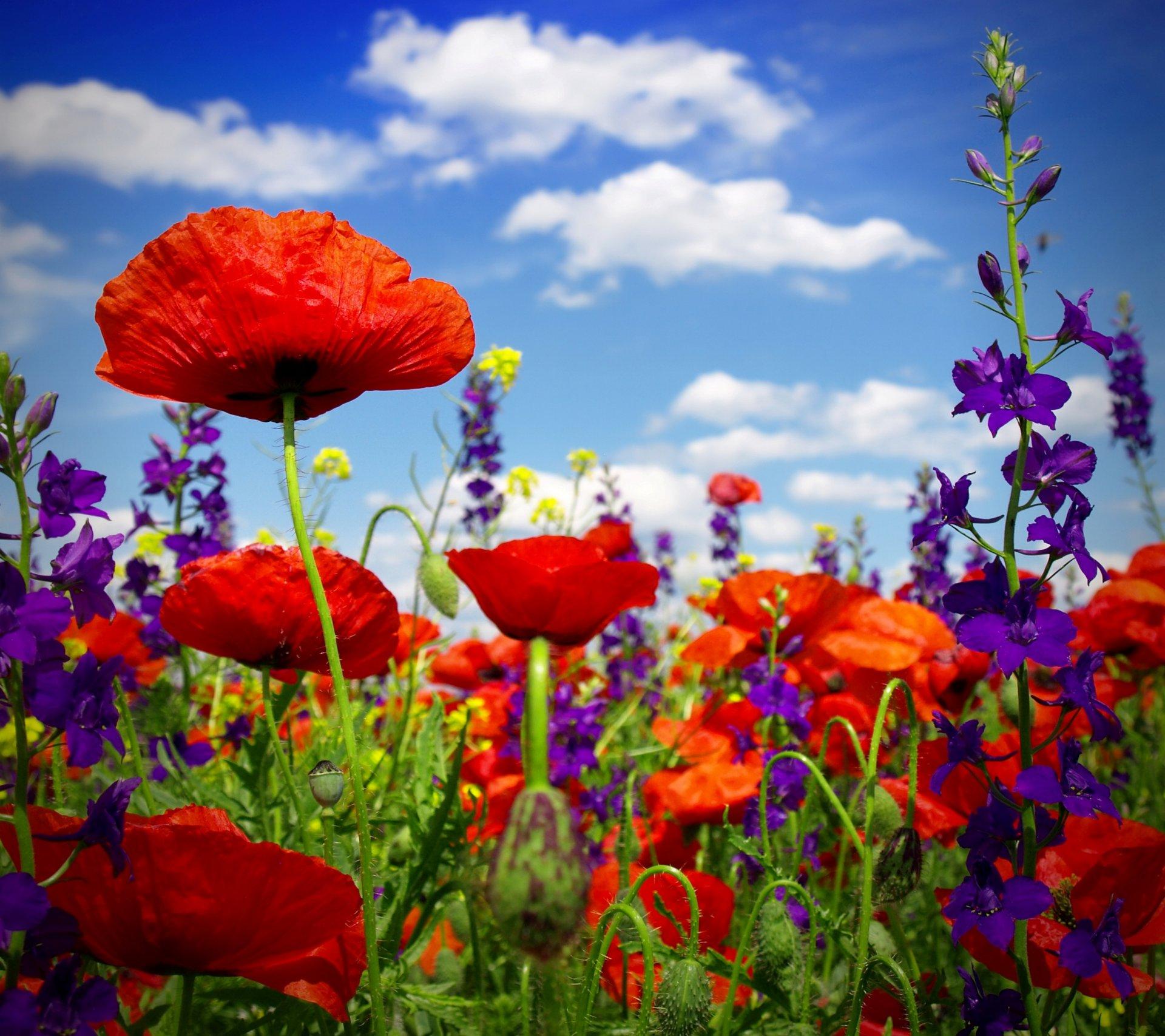 Обои лето, яркость, цветы. Цветы foto 15