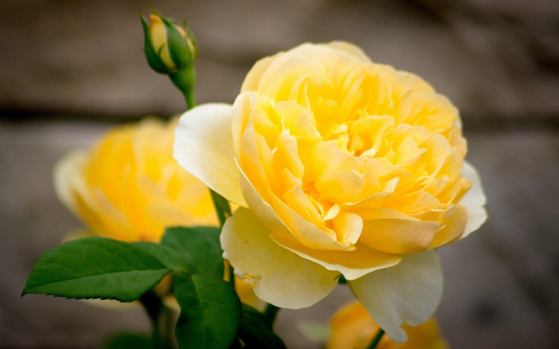 Желто белые картинки