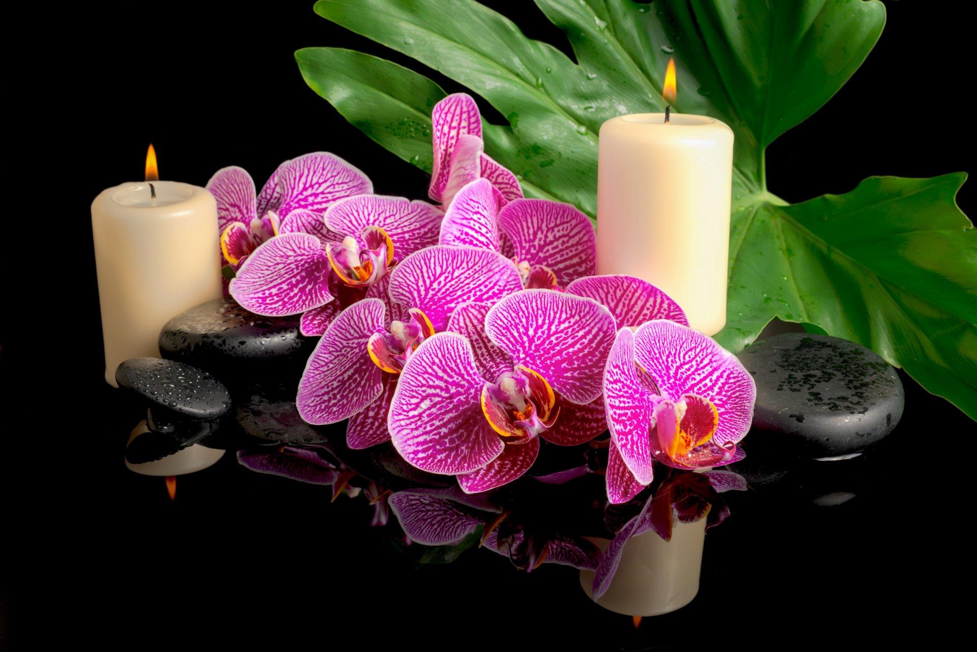 Орхидеи обои на телефон