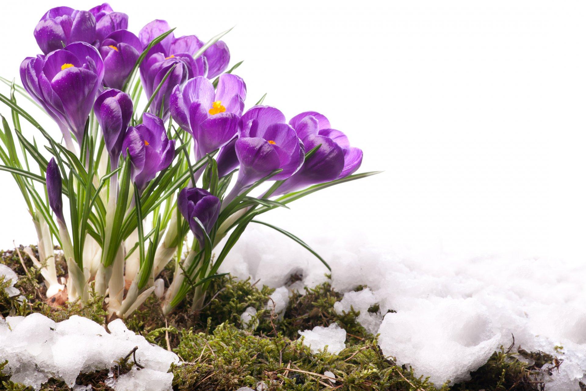 Февраля, открытки первые цветы весны