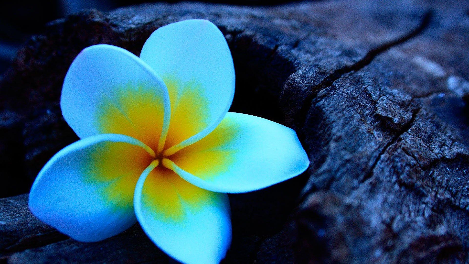 шею картинка удивительного цветка чувствую