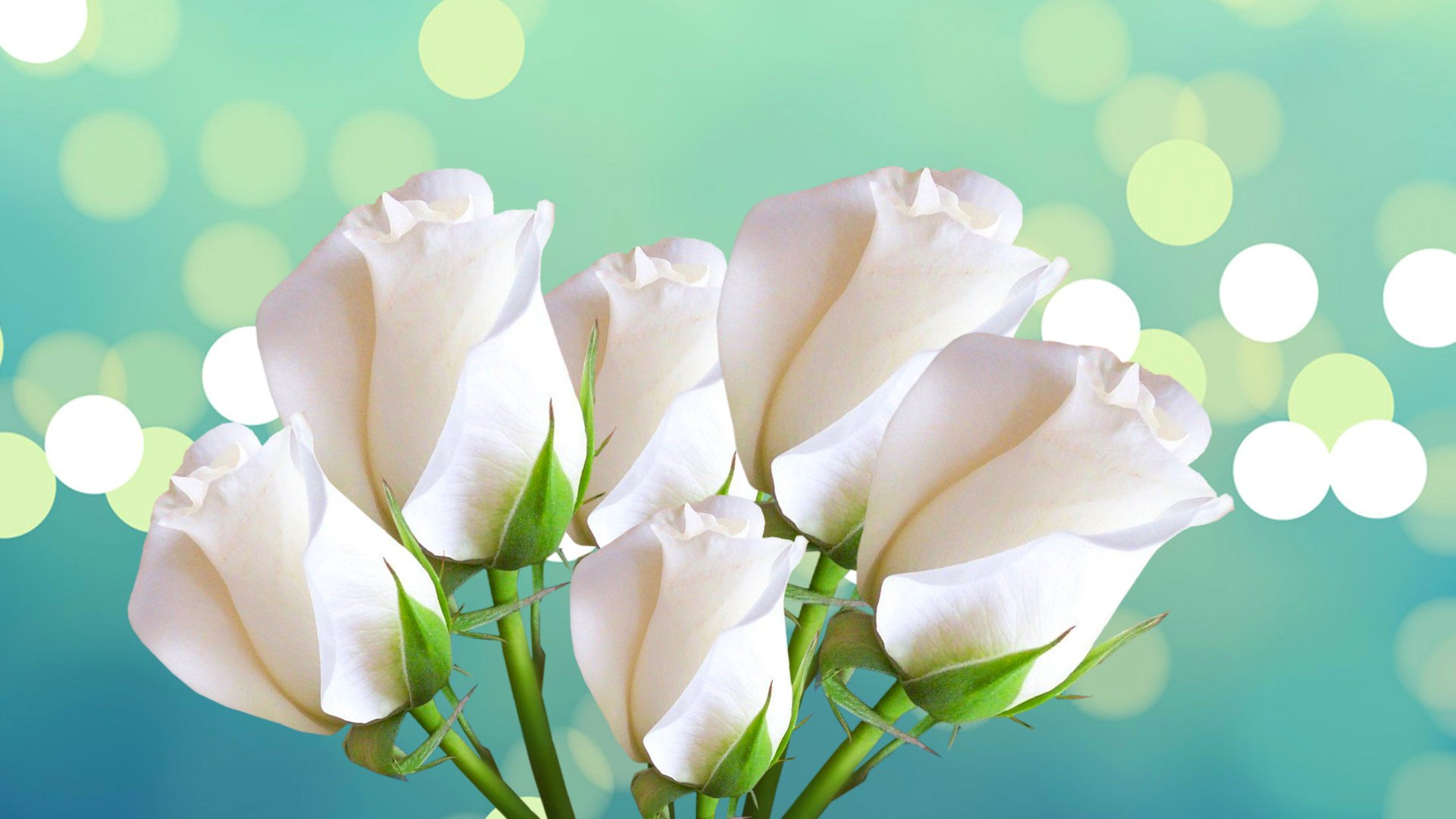 8 марта, цветок, роза подборки