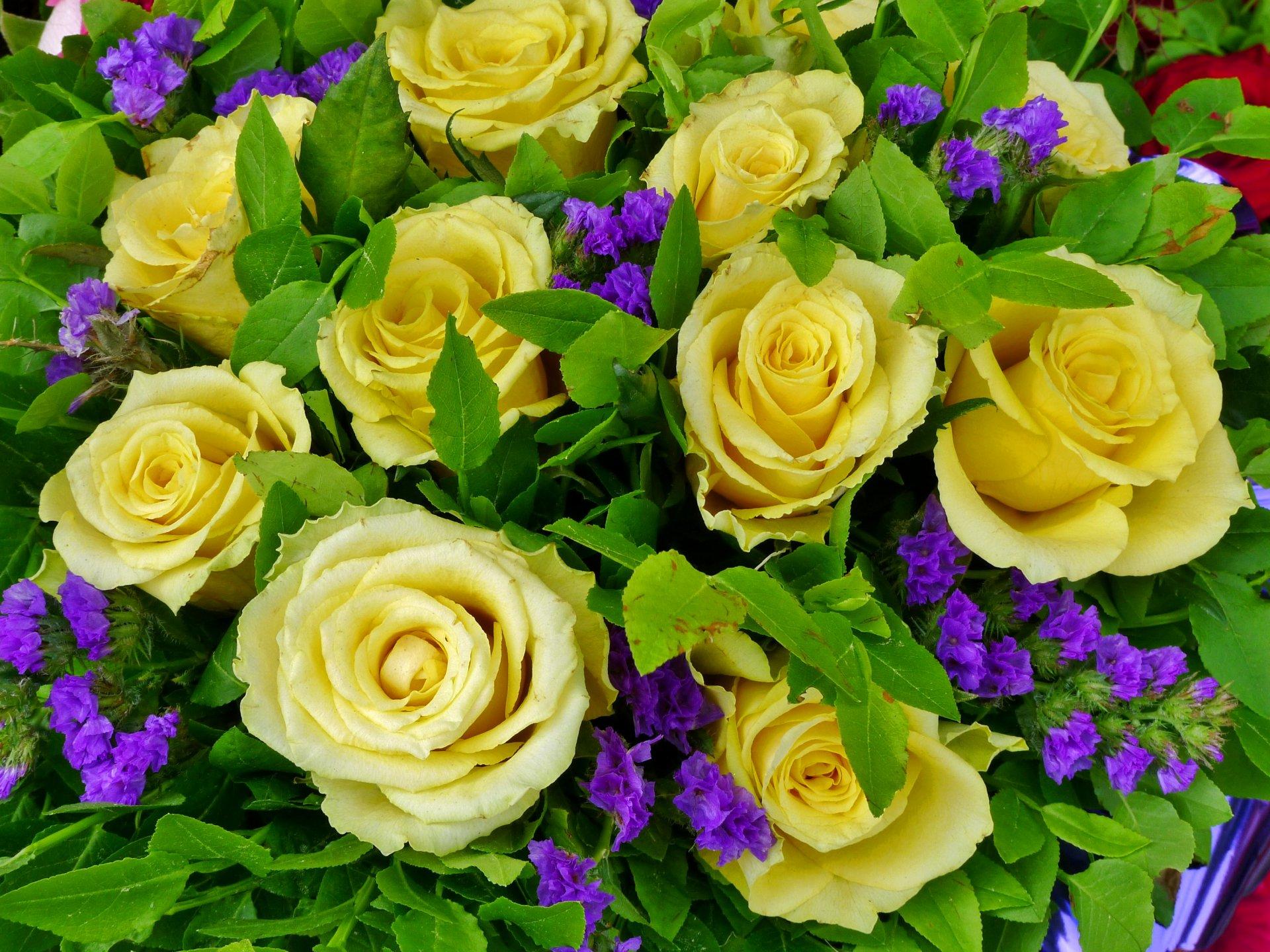 Картинки с цветами с розами красивые