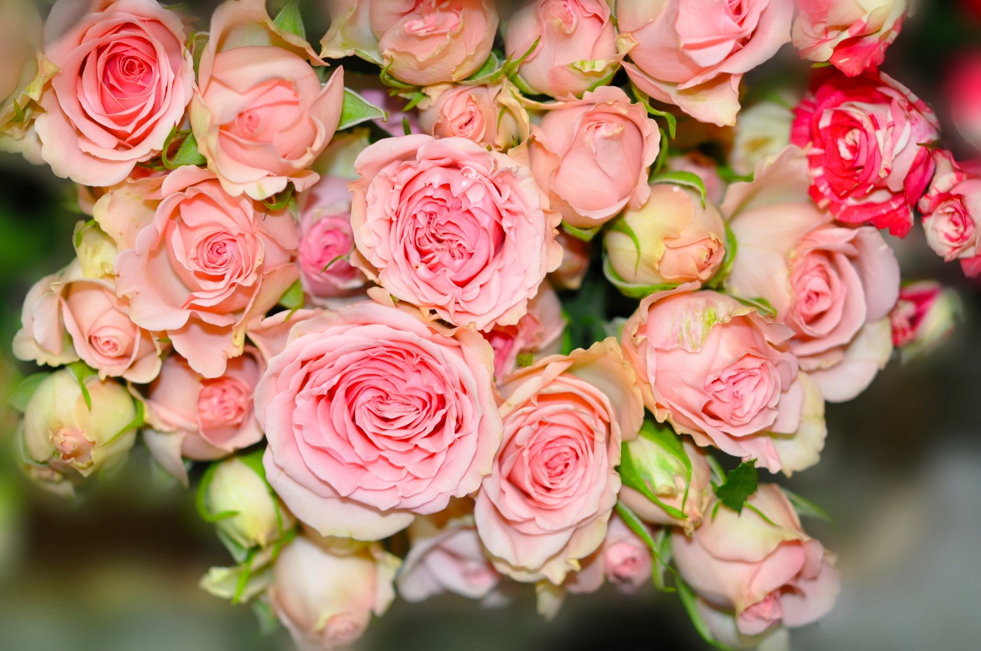 How to Make Bridal Bouquets (with Pictures) - wikiHow Pictures of pink rose bouquets