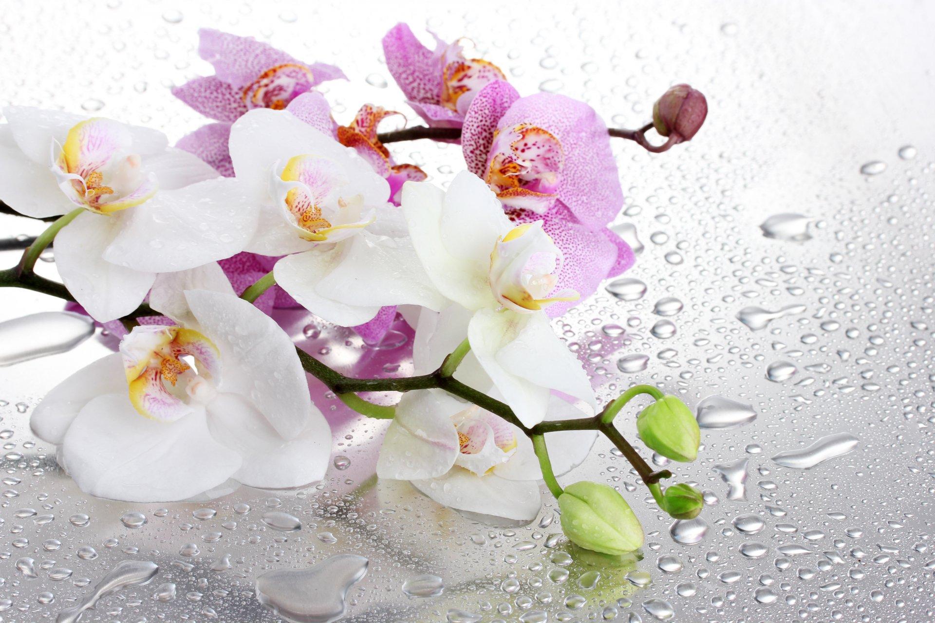 Фото орхидеи высокого качества