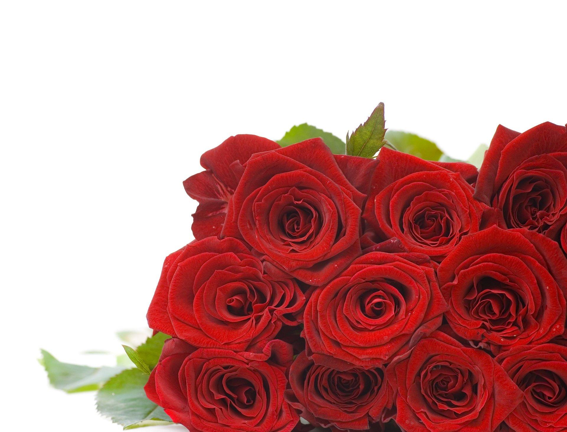 Поздравлениями наступающим, букет роз на белом фоне открытка