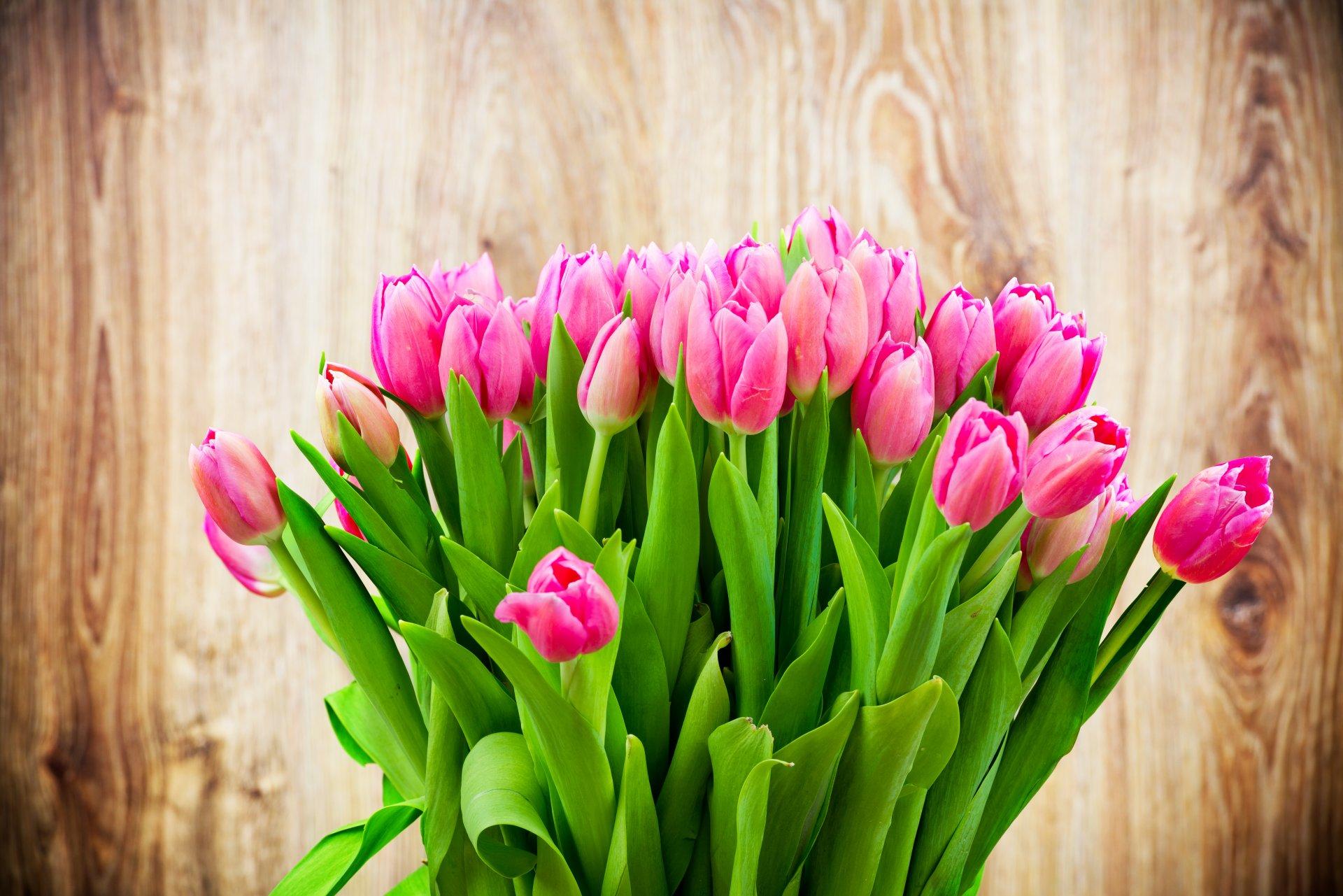 тюльпаны фото для телефона такой организации жилого