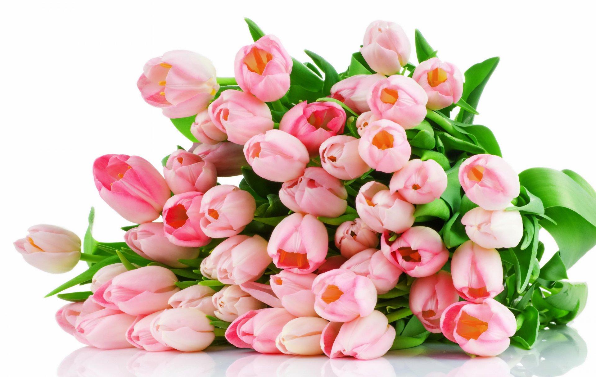 Картинки, картинка цветы на белом фоне для открытки